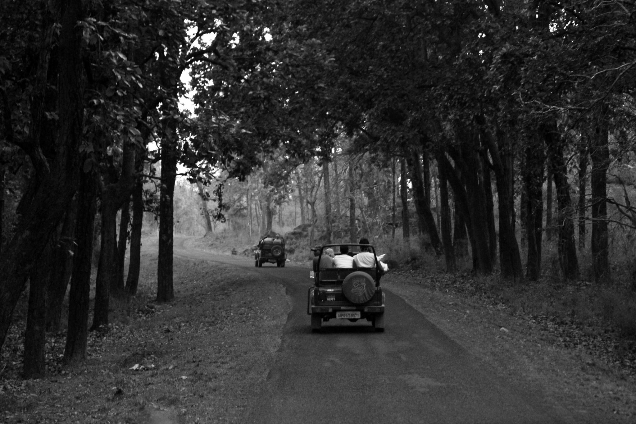 Jungle of Kanha by Sameer Wakude