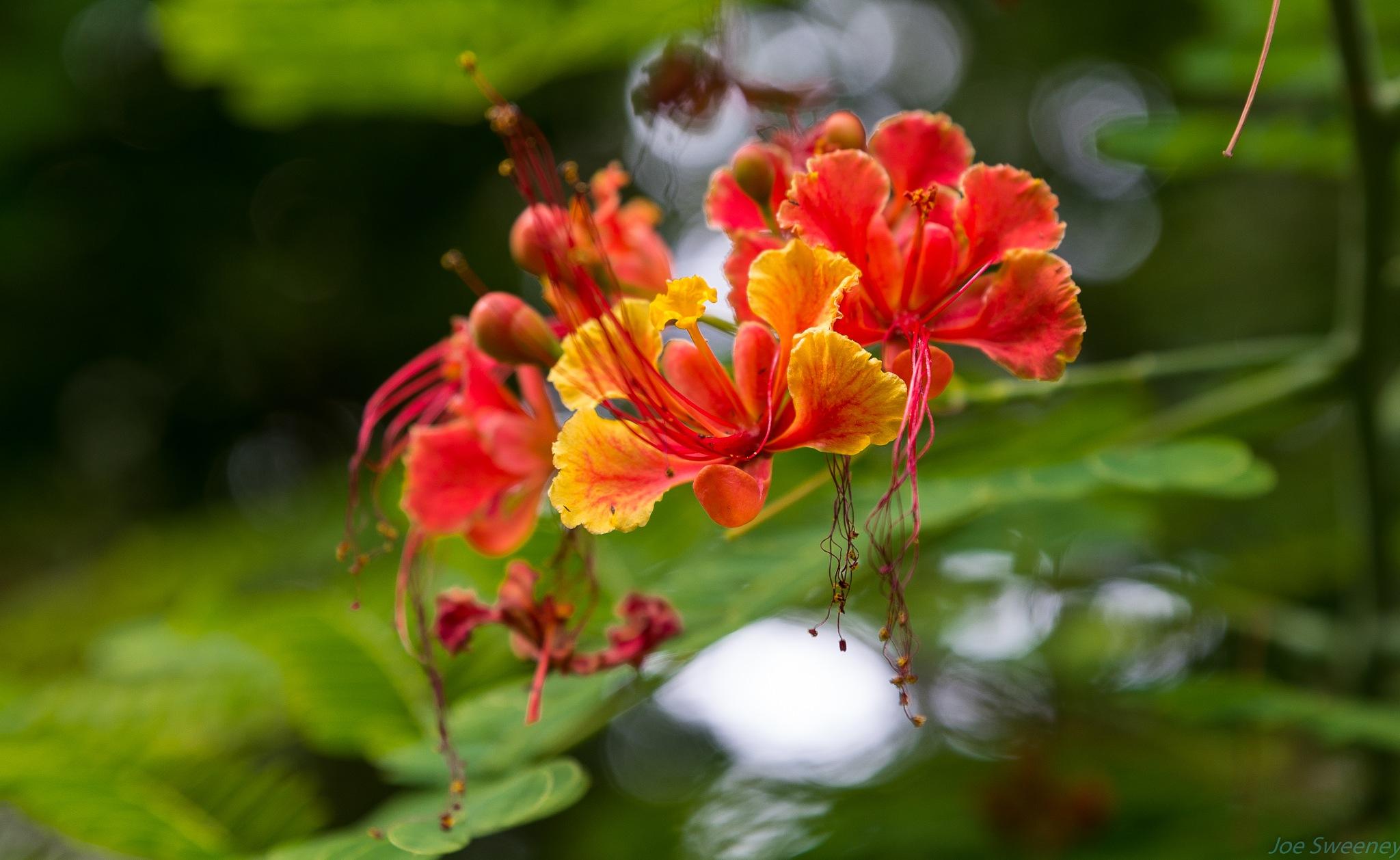 Beauty at Sunken Gardens by Joe Bike