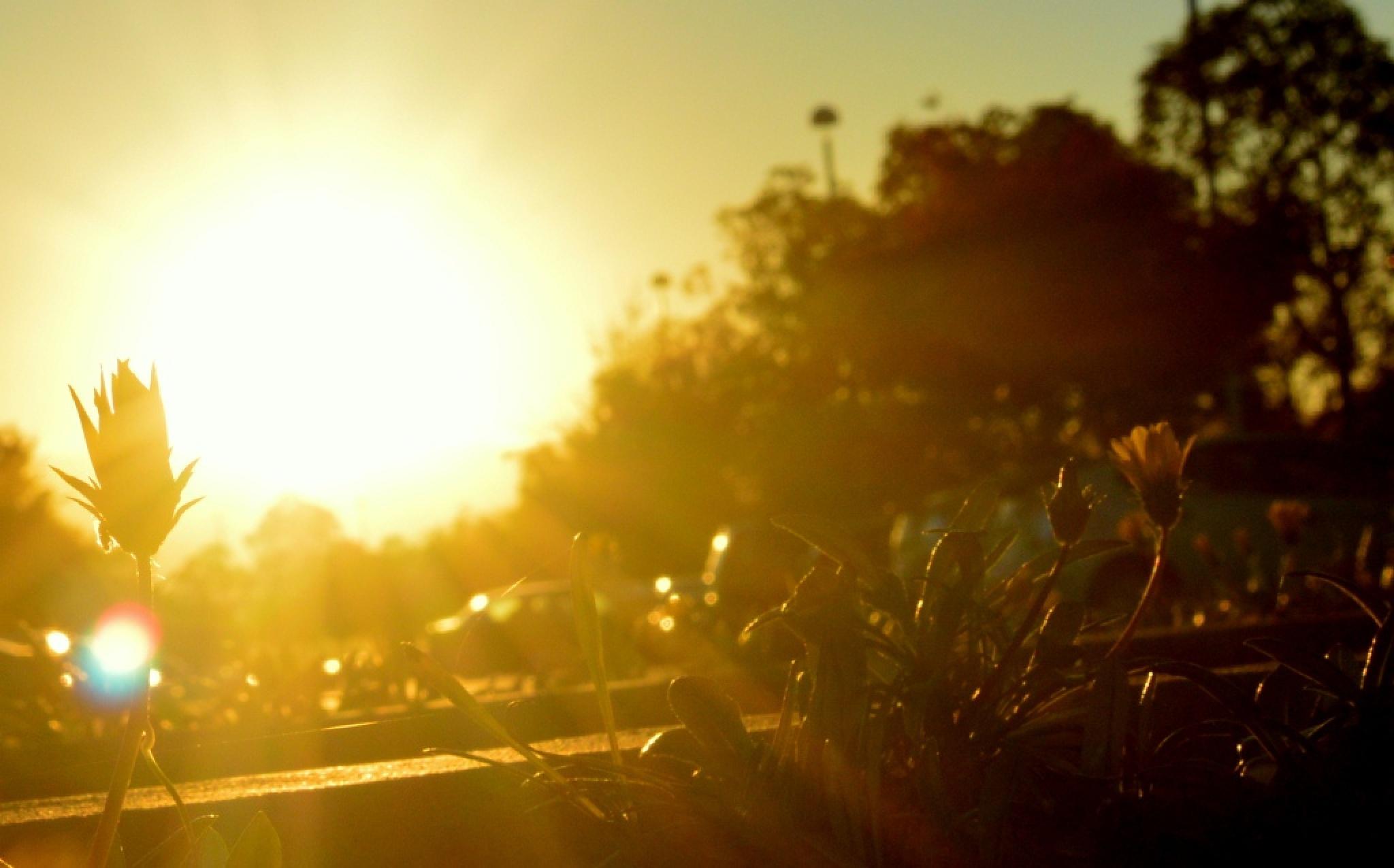 Out in the sun! by Sreelekshmy ST