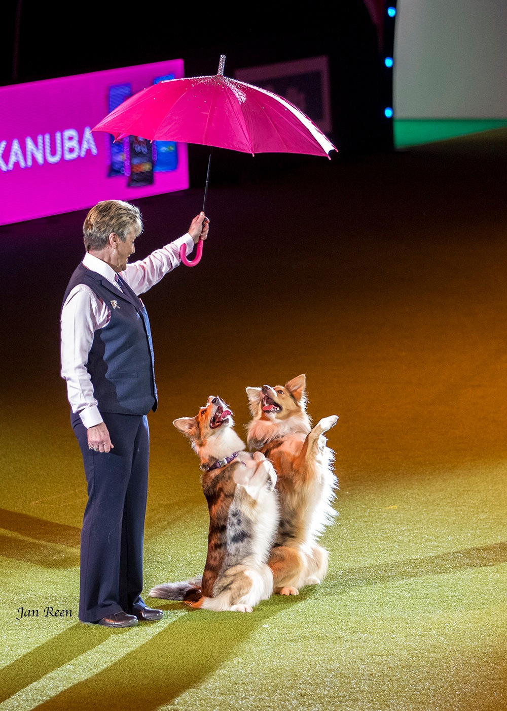 Crufts... Heal work to music routine by Jan Reen