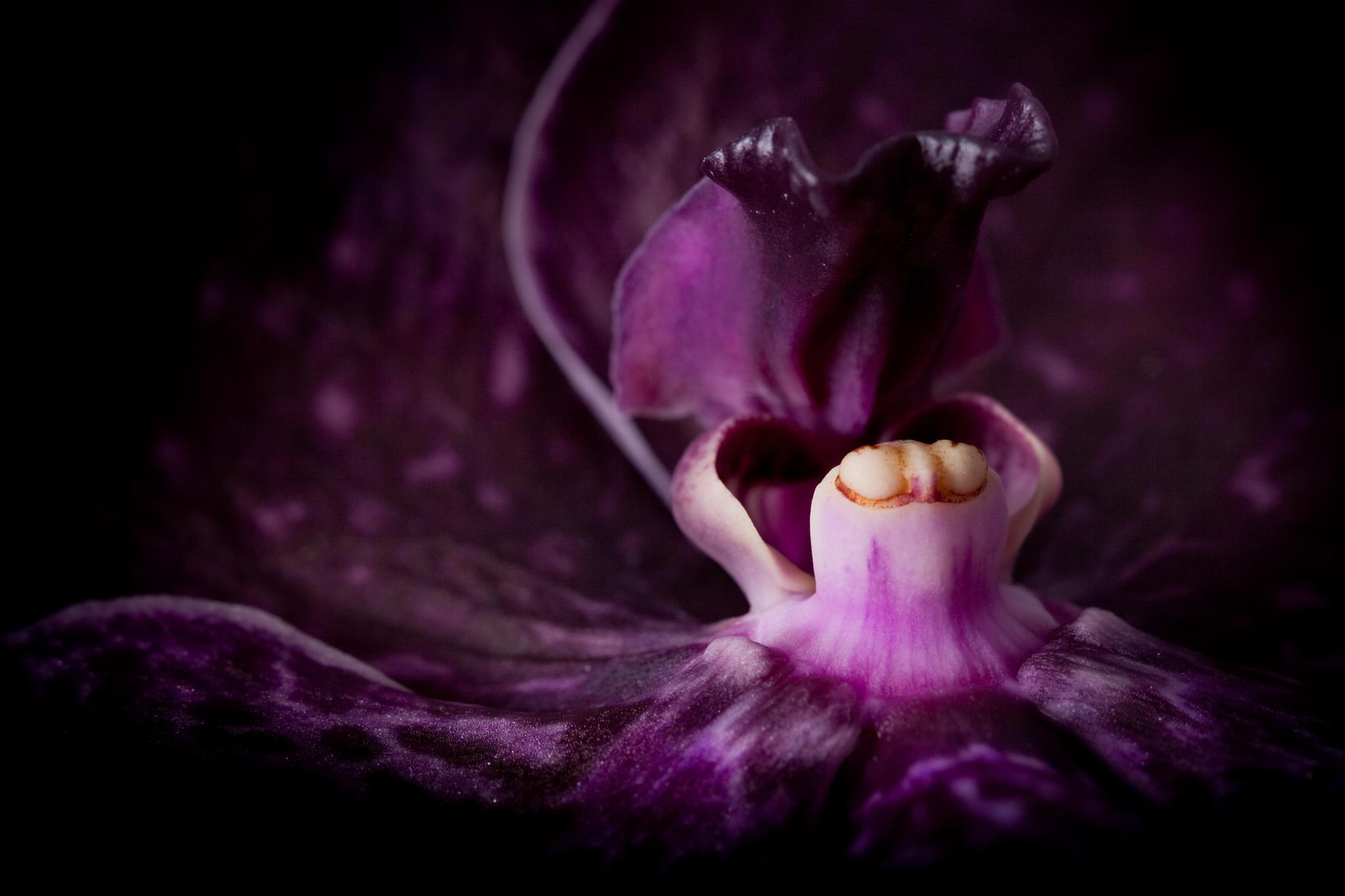 Beauty by Cynthia Hasenbos