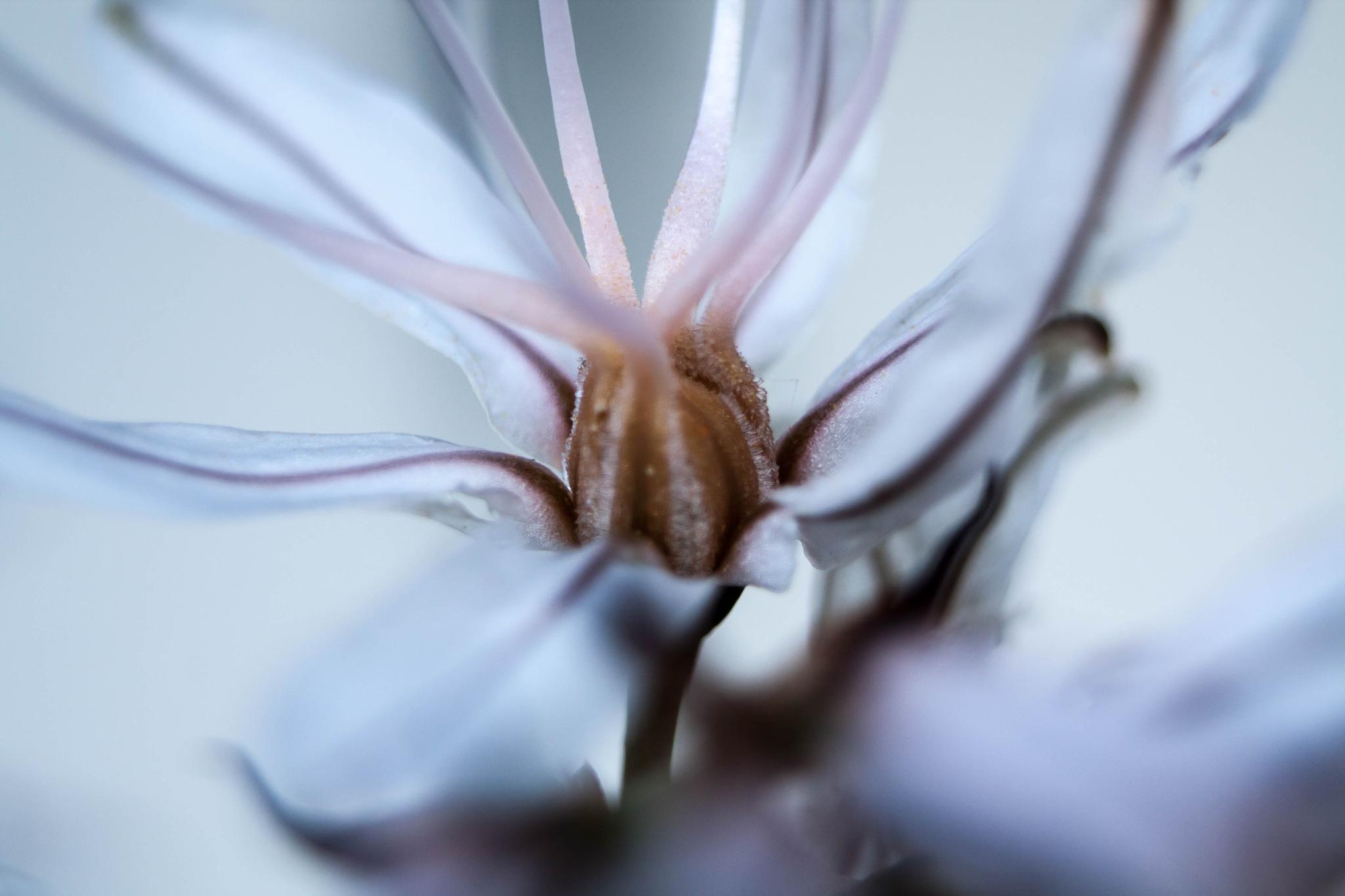 octopus by  Amadeu