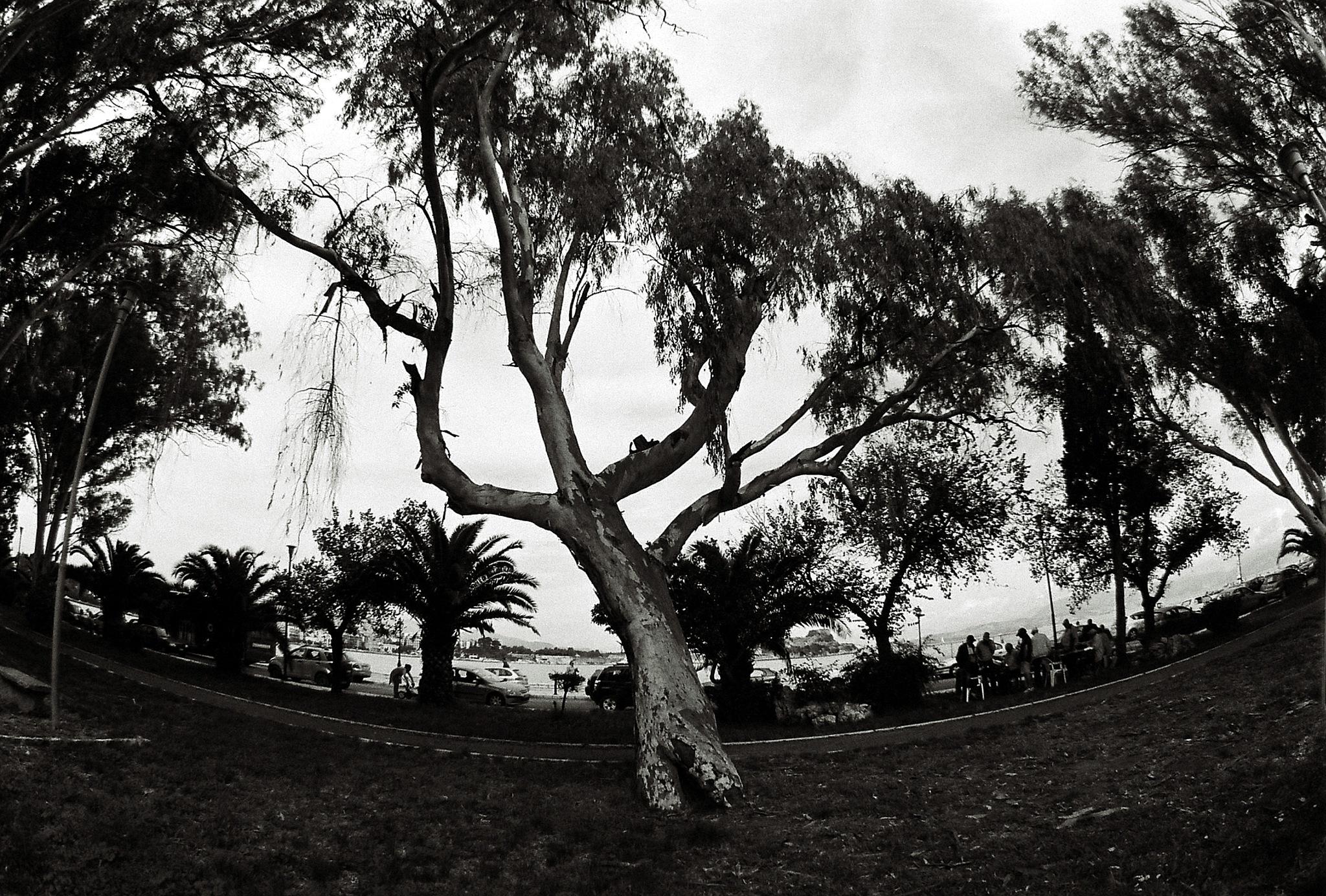 The Desperate Tree by  Sotiris Hartzavalos