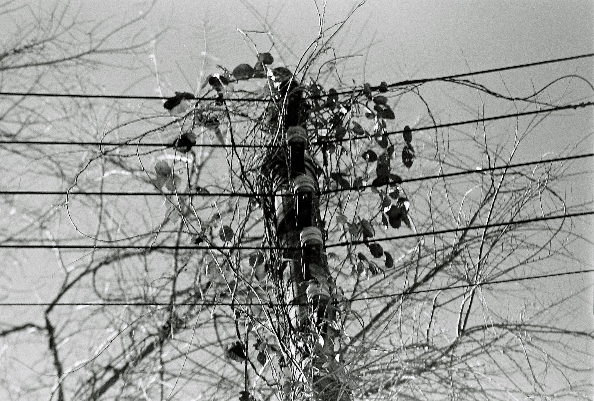 A heart on wires by  Sotiris Hartzavalos
