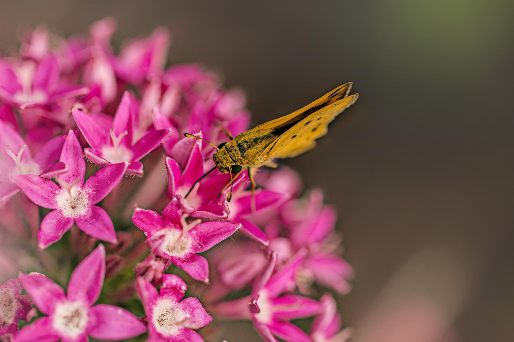 Moth_Flowers by IdaBurress