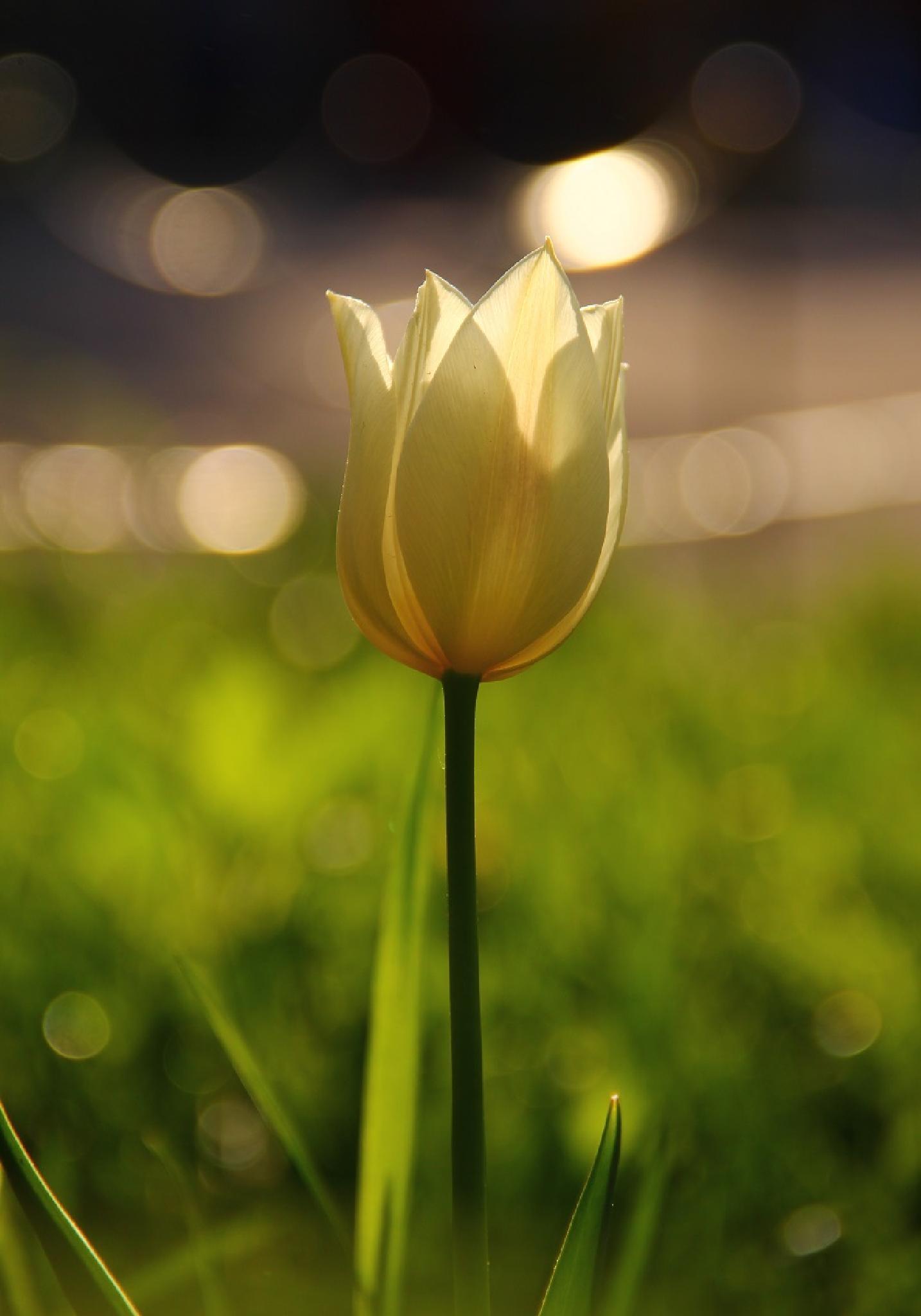 Cosmic Tulip by Alina Nilova