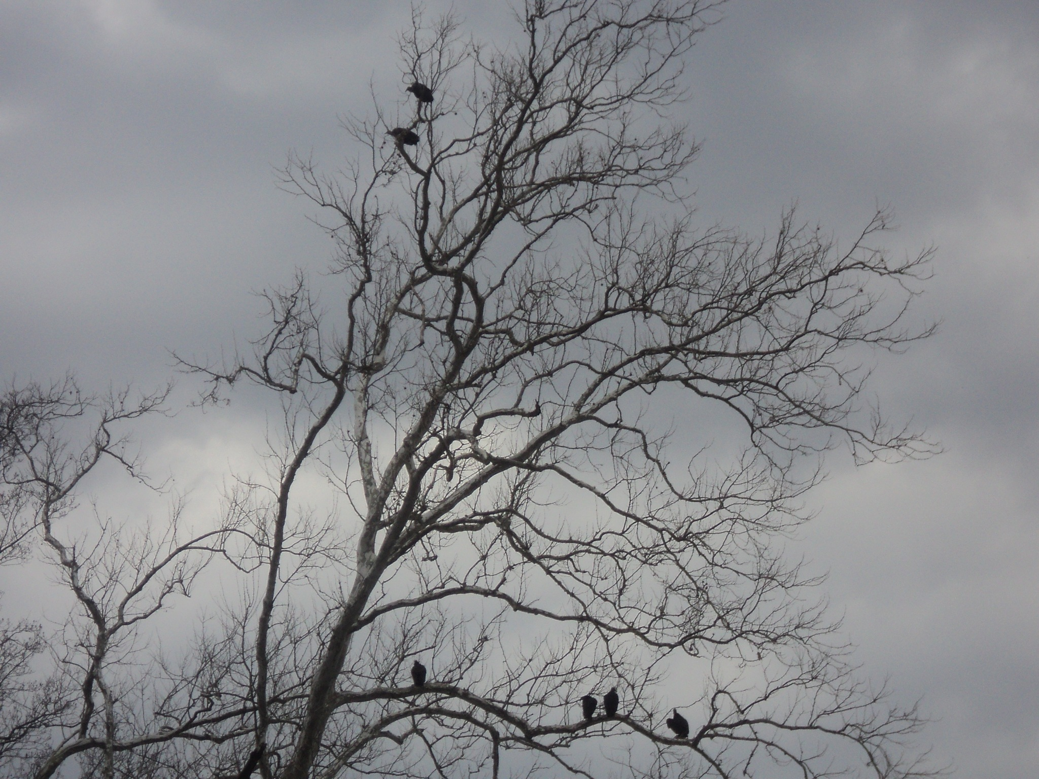 birds  in   the  tree by Michelle