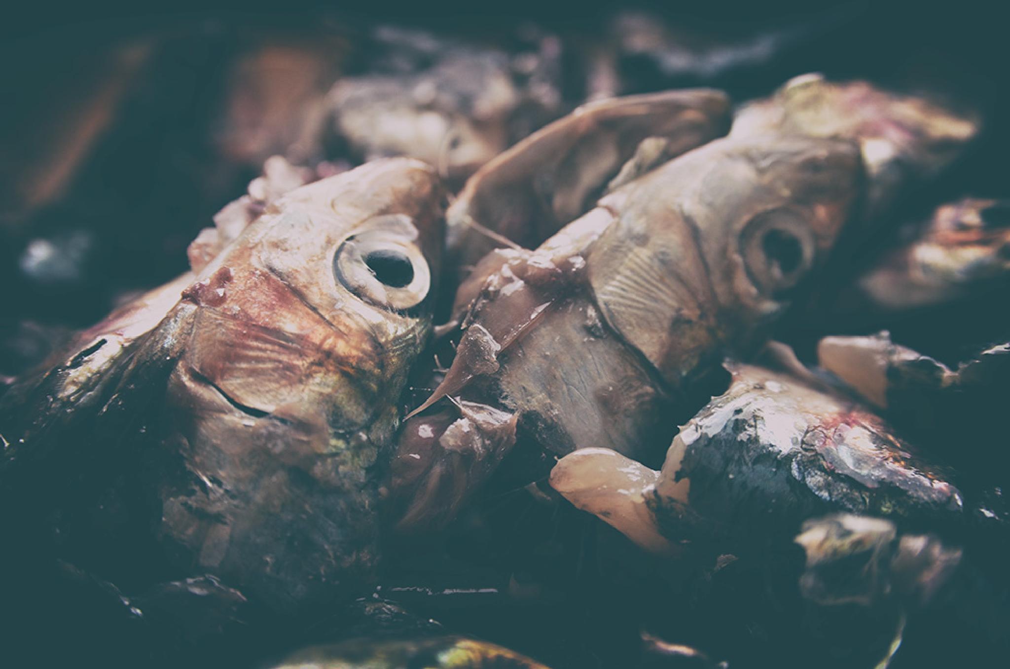Nature morte. by Vedrana Domazet
