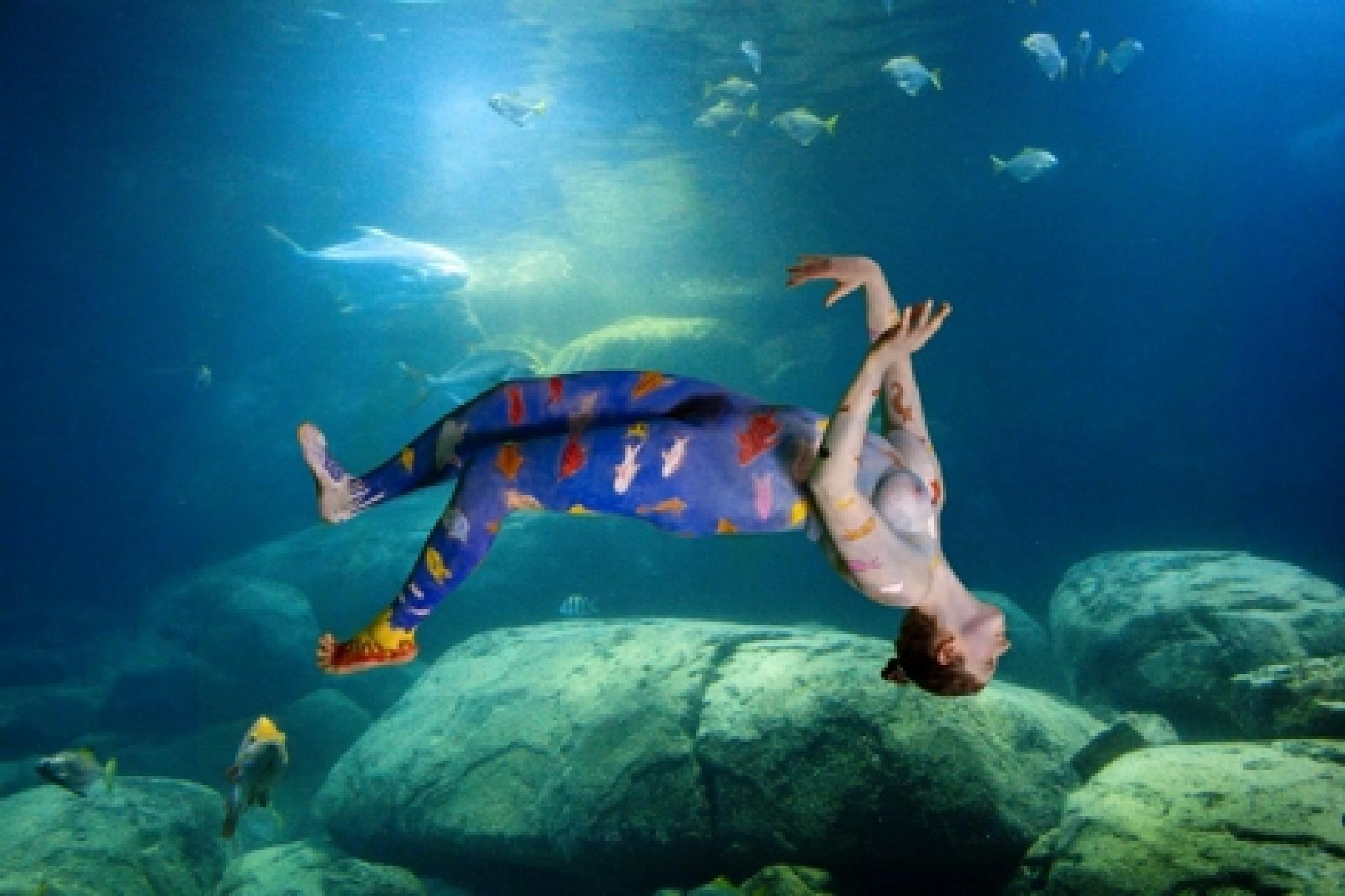 Aquarium by Amit Bar
