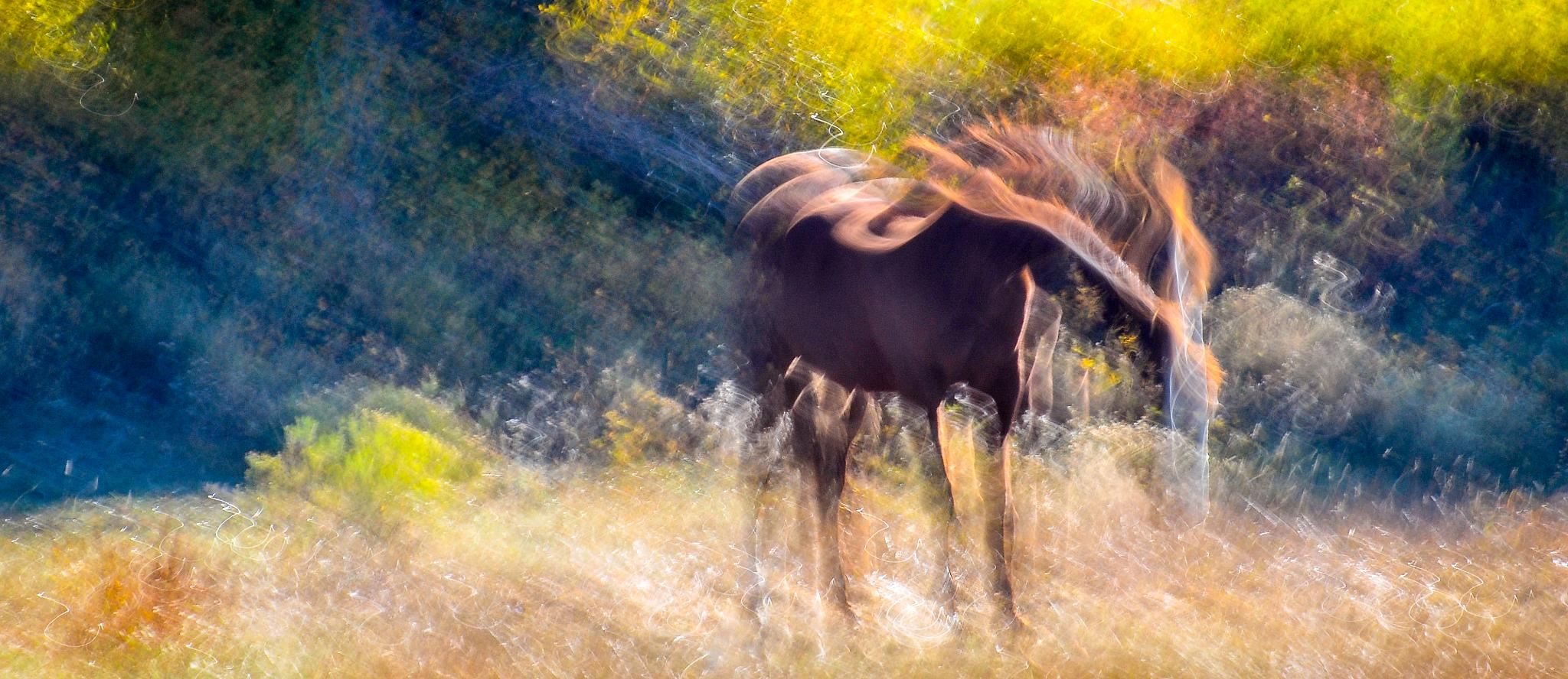 Horse in Meadow by On A Walk Photography