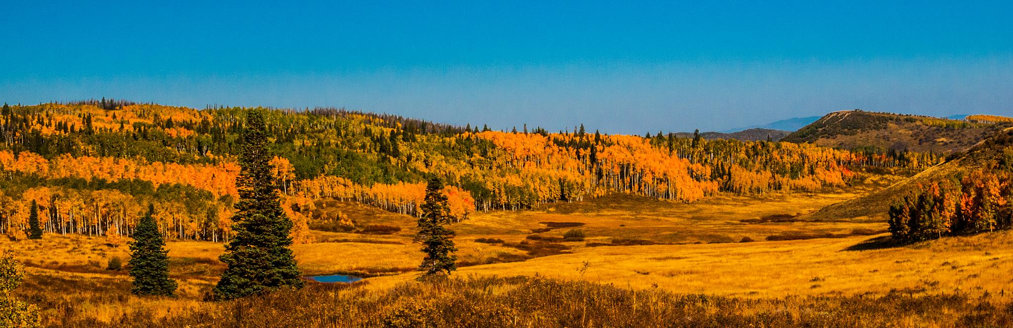 Golden Valley by On A Walk Photography