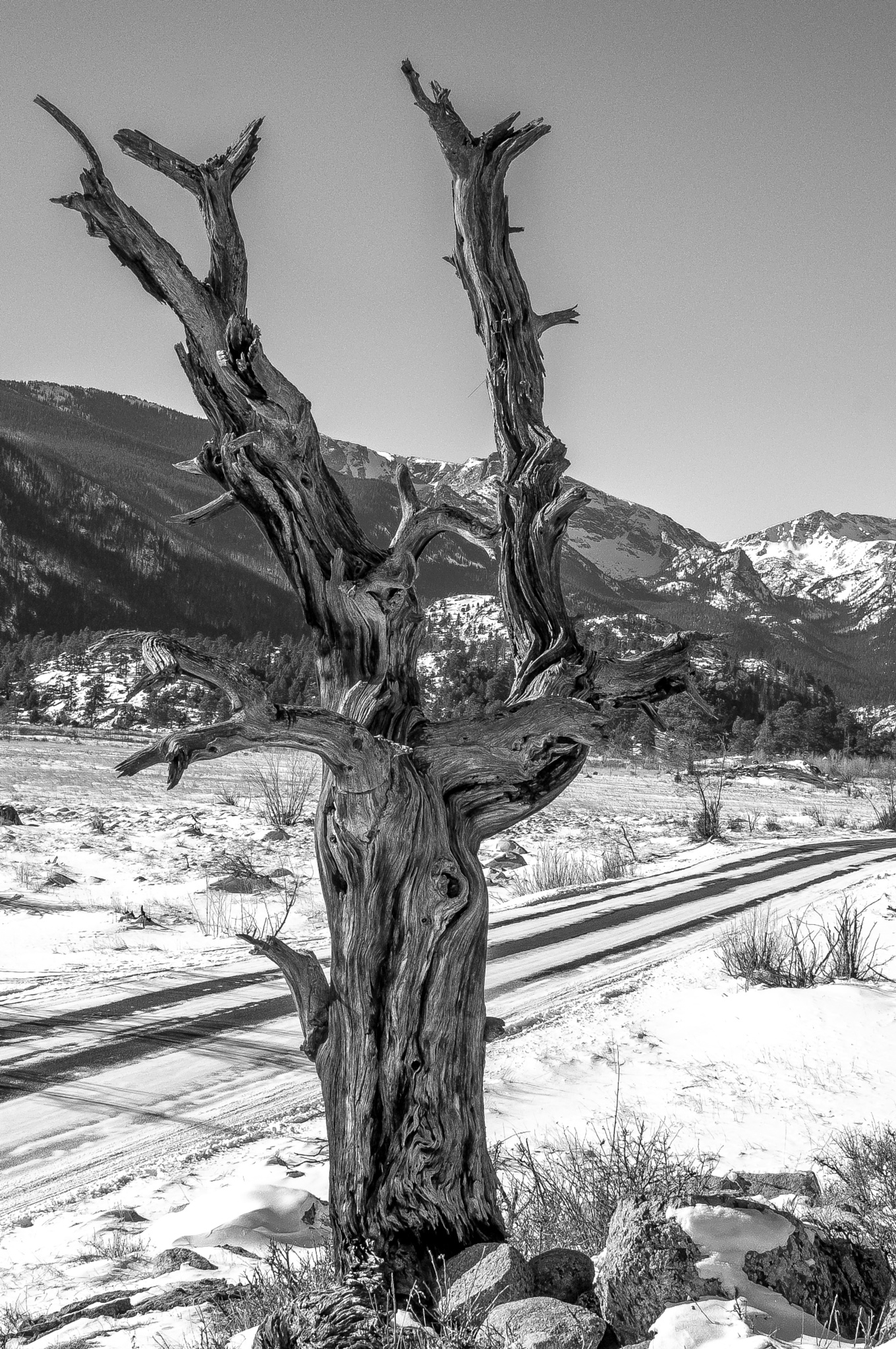 Weathered Sentinel by On A Walk Photography
