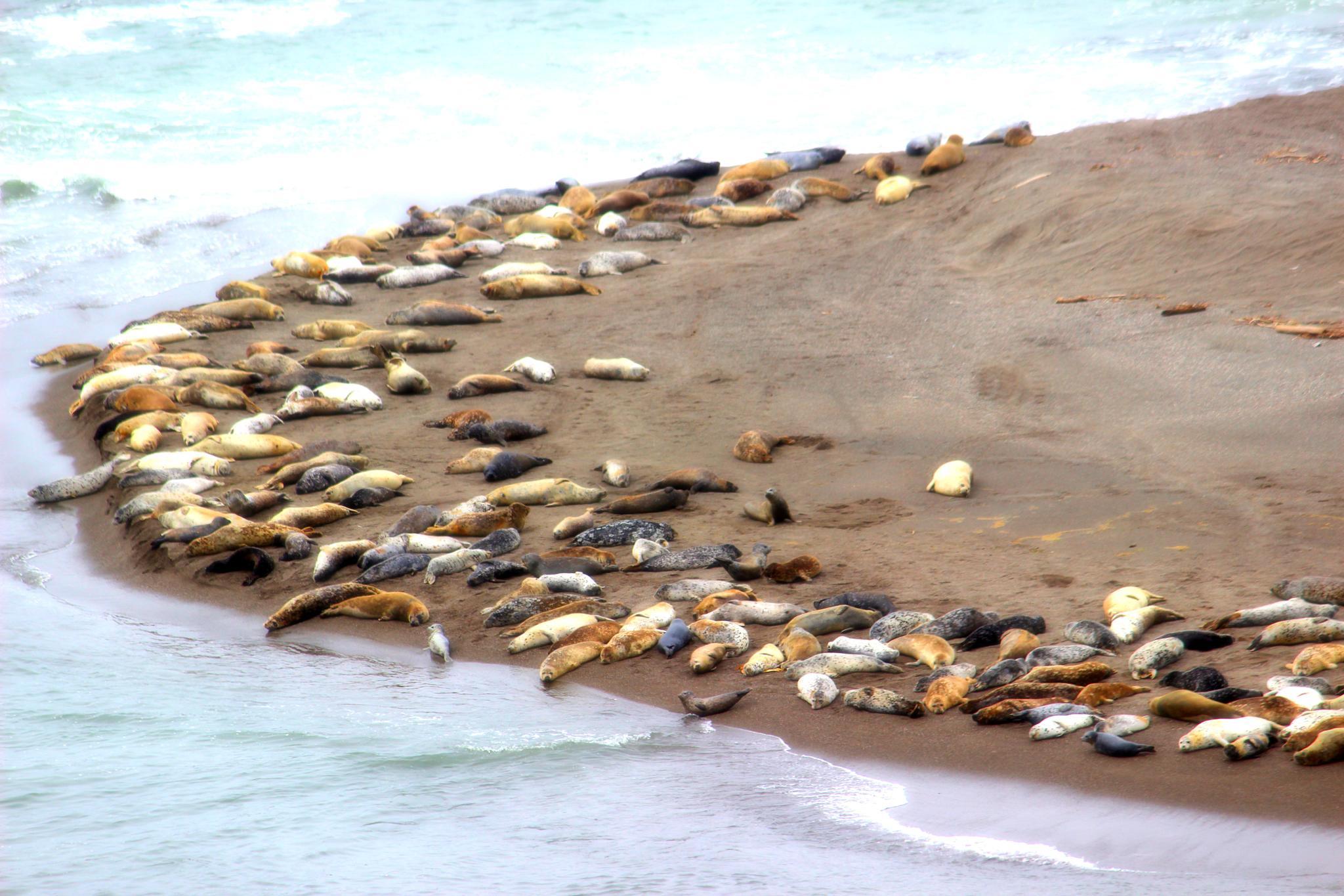 Sea Lions by Savannah Pavo Real