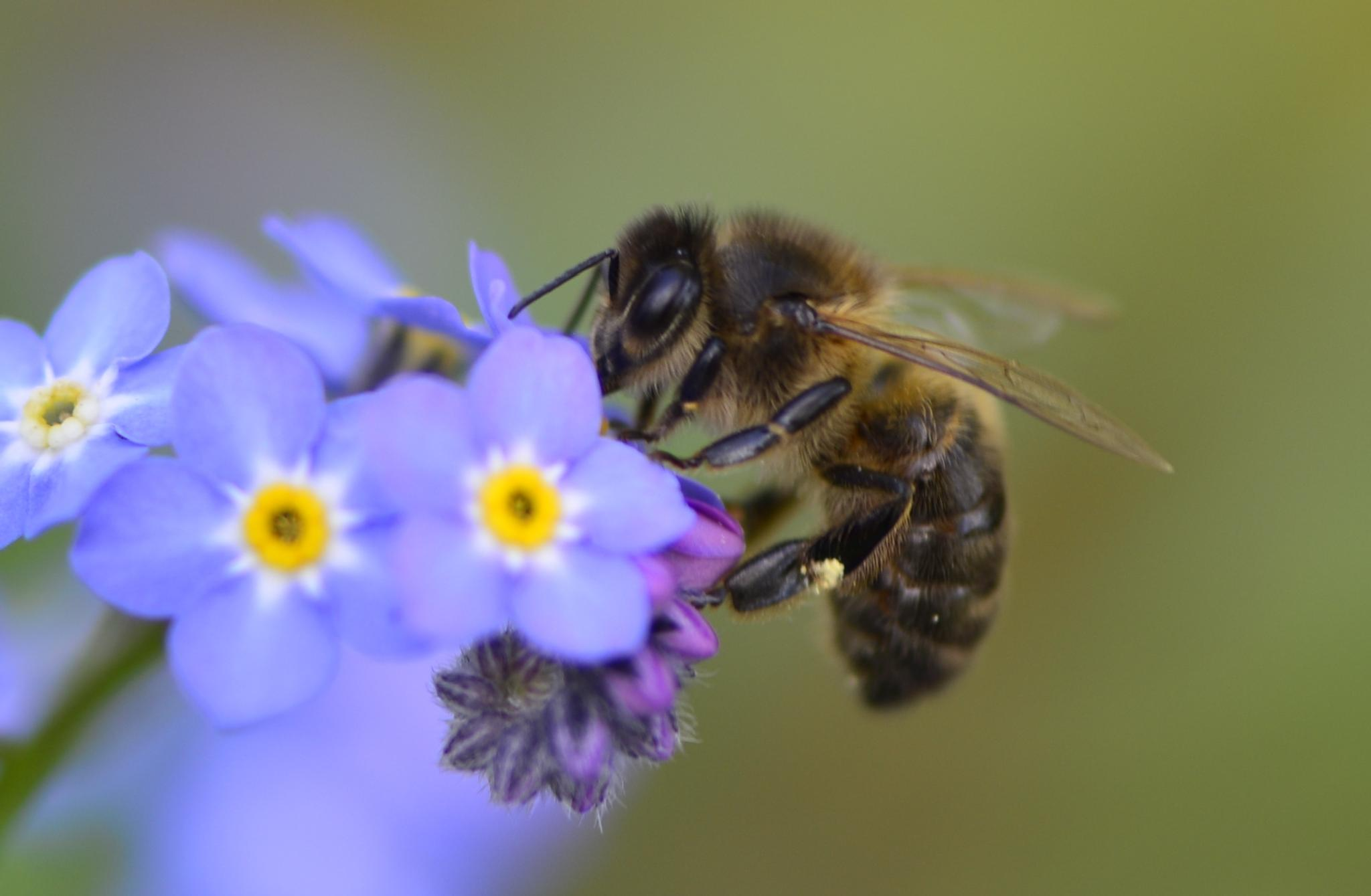First Bee of Summer by Ann