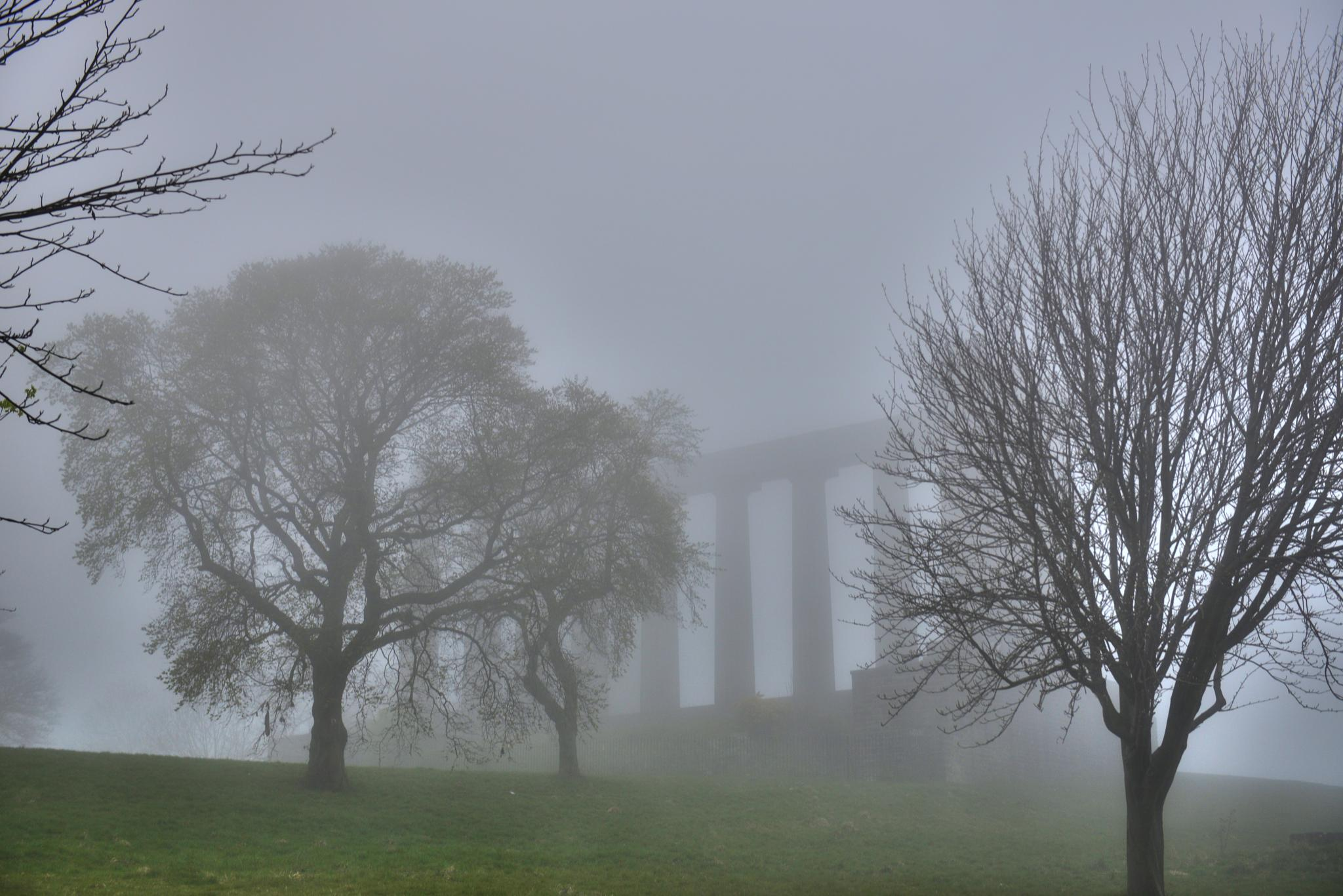 Edinburgh Calton Hill  - Trees in the Mist by Ann