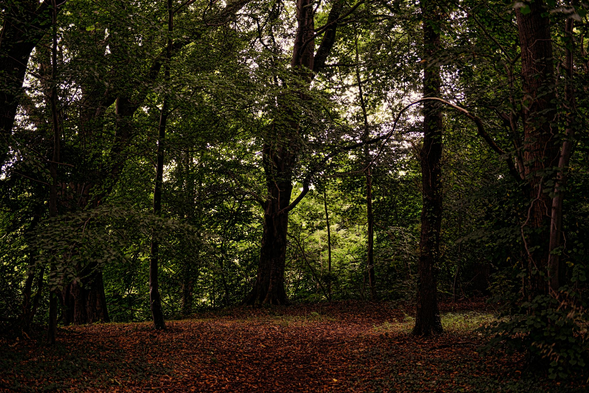 Wooded Glen, Midlothian, Scotland by Ann