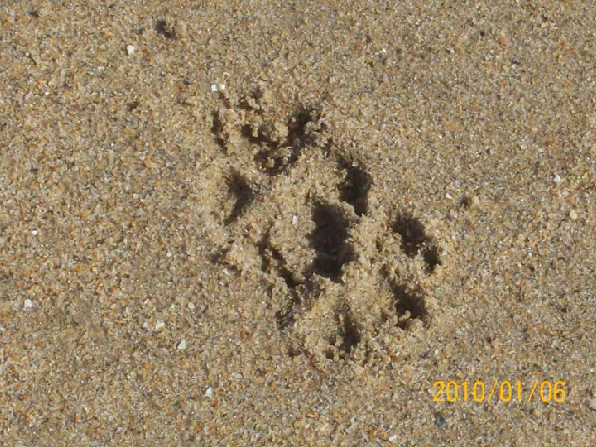 Footprints by Geanine McDonald