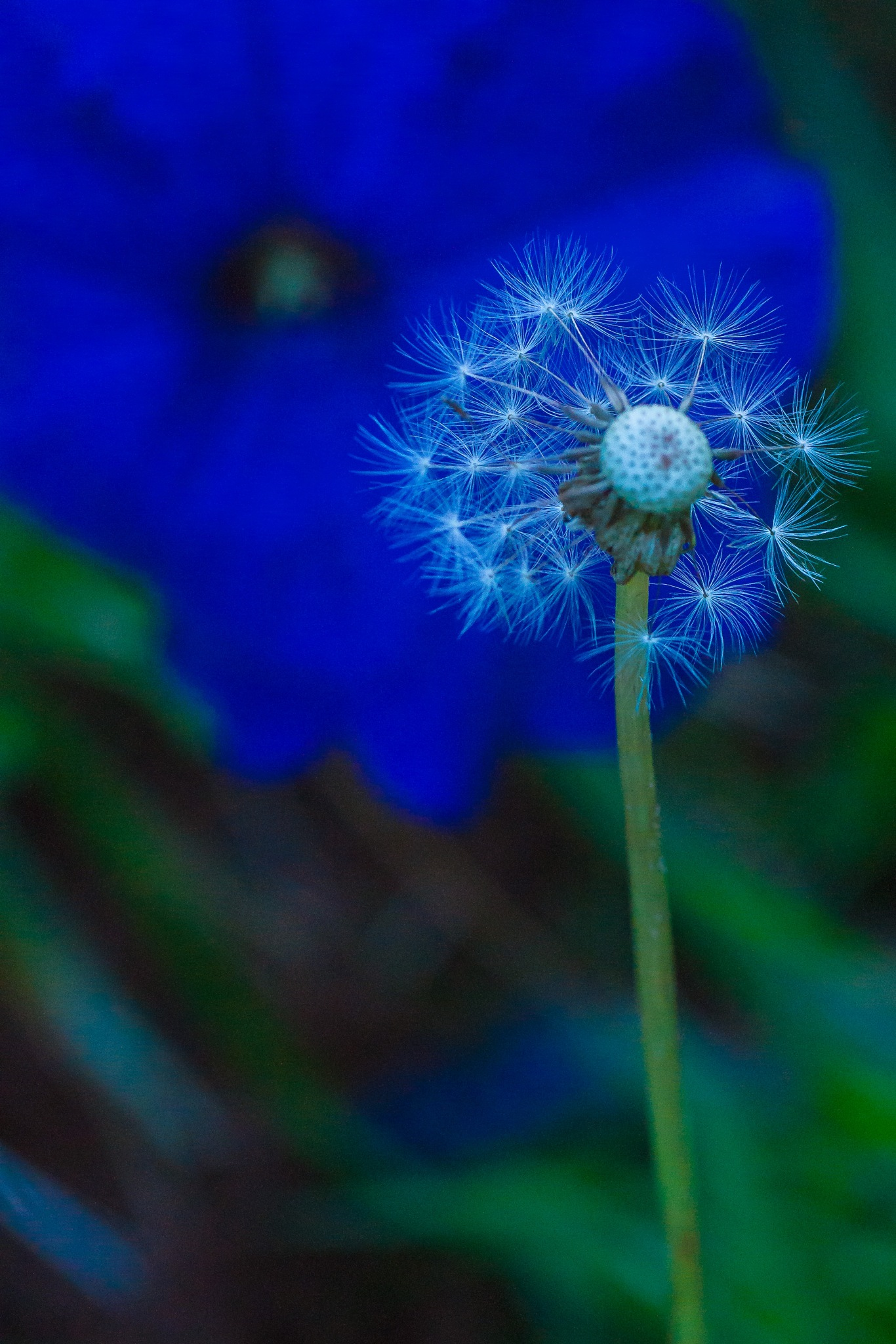 Star seeds by Hervé Samson