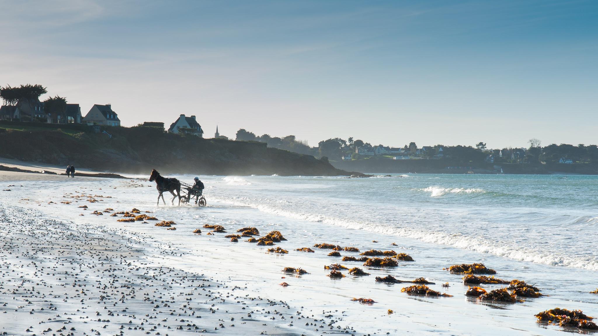 horse at the sea by Hervé Samson
