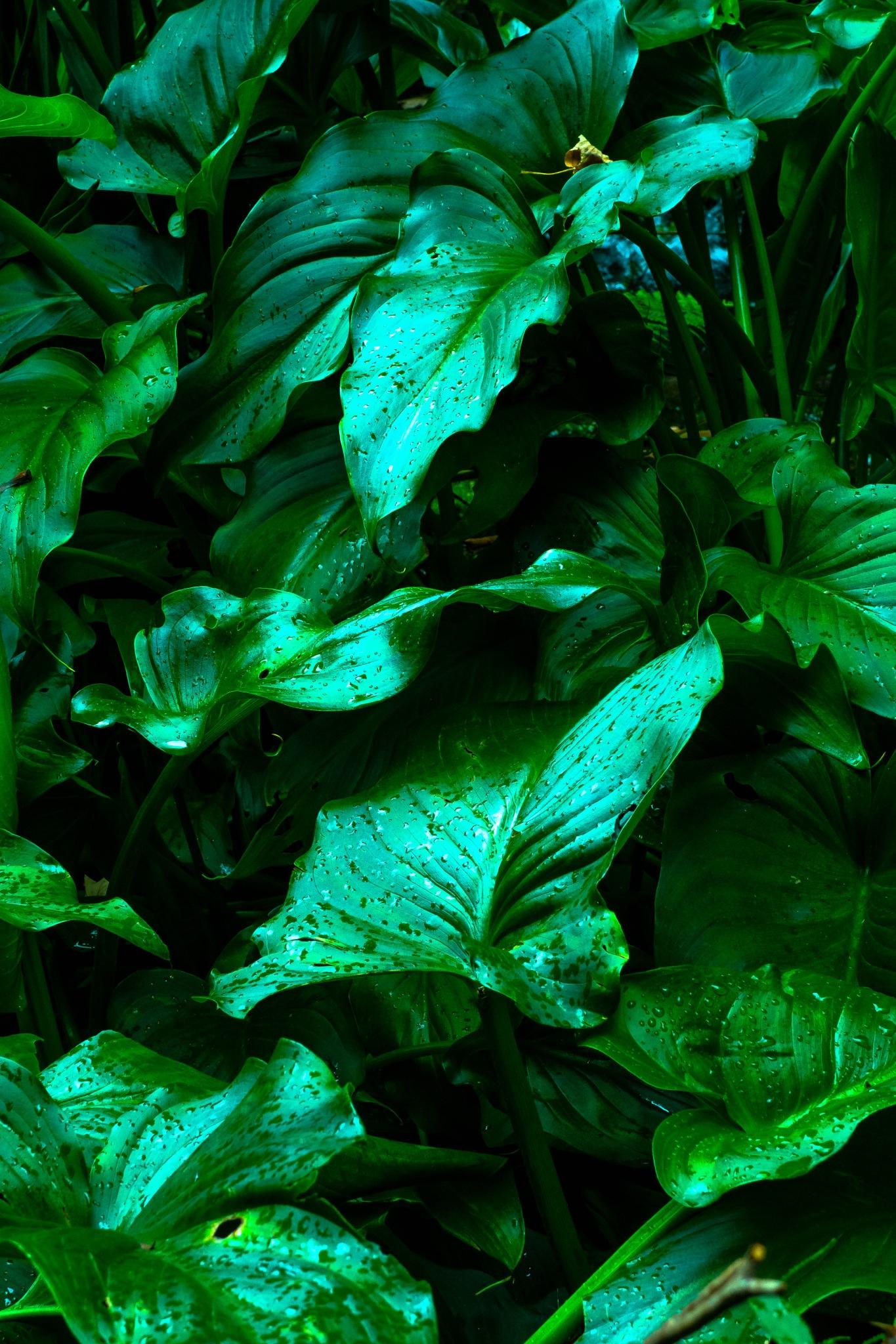 Bright leaves by Hervé Samson