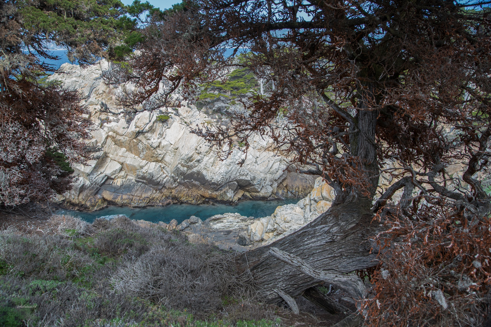 Point Lobos by SabrinaA