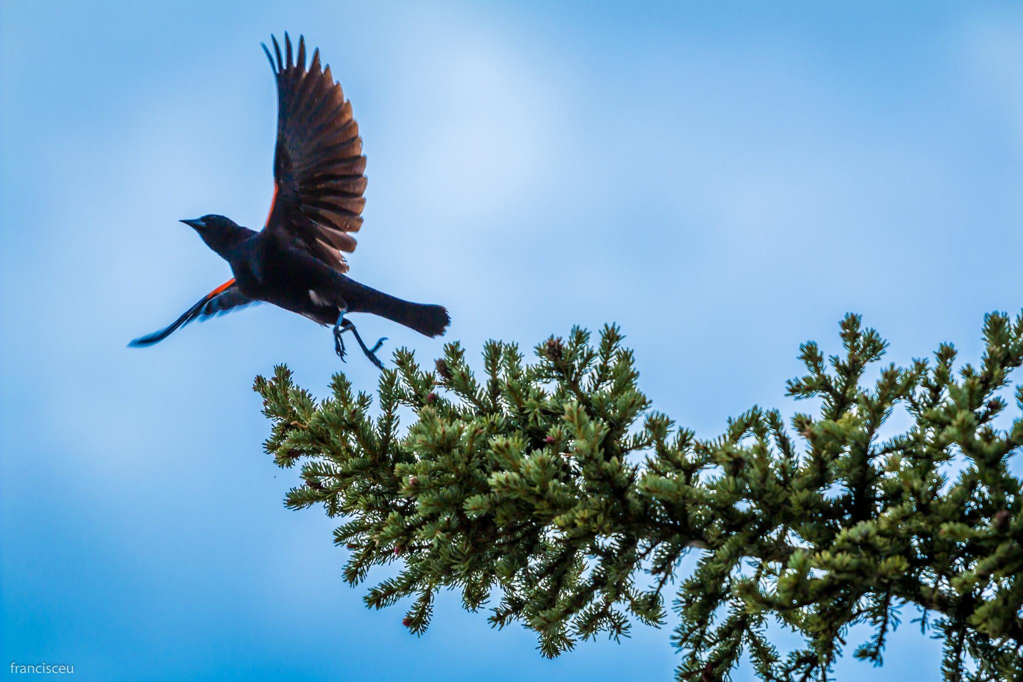 take off by Laikhal
