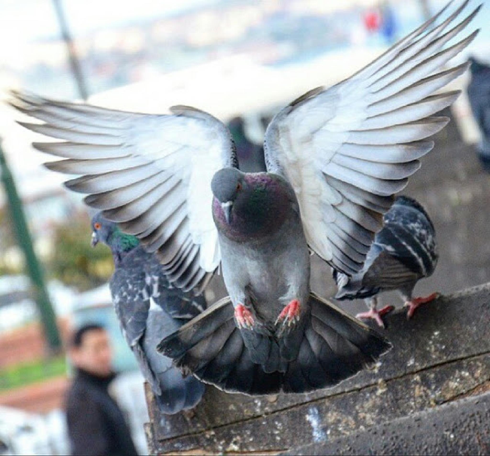 beautiful bird by Hazem Friend