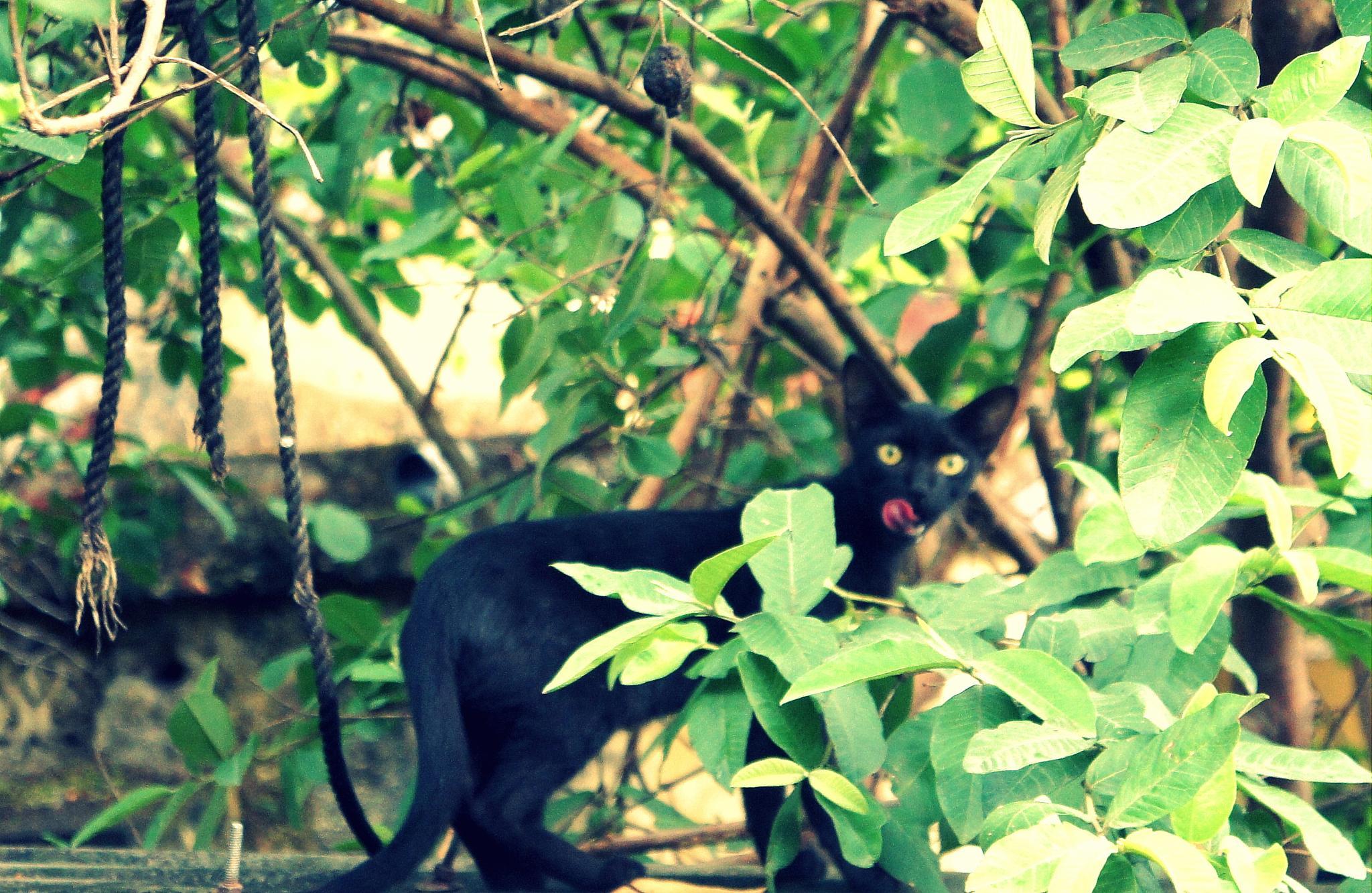 wild cat ....staring me.... by Shubham Jain