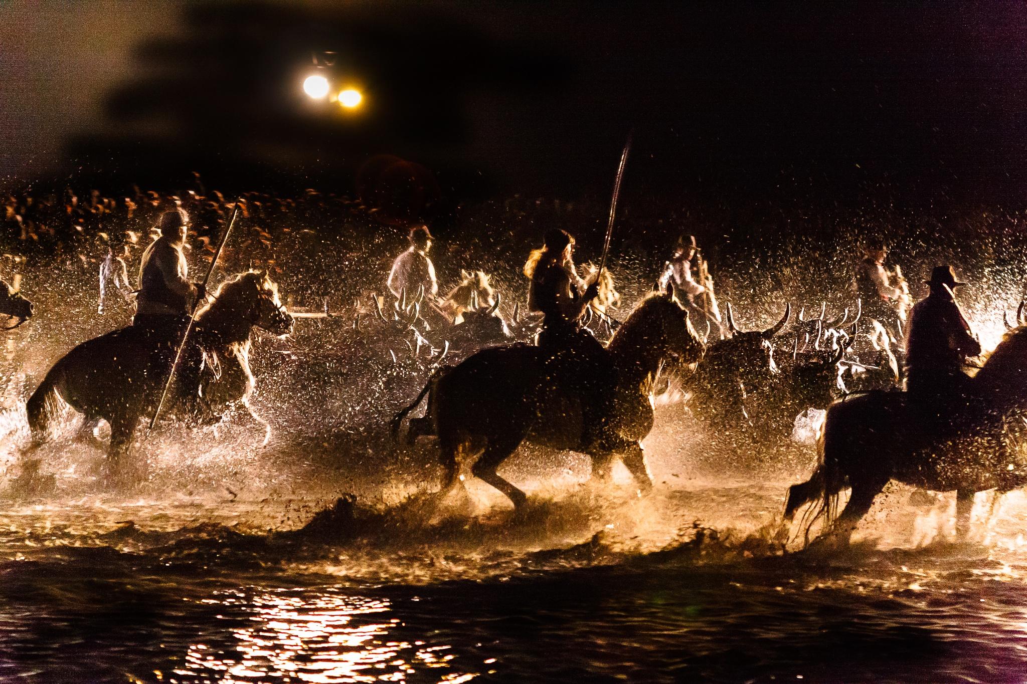 Photo in Travel #catlle #horses #herding #dark #light #festival #camargue #backlit #water #drops #people #show #demonstration