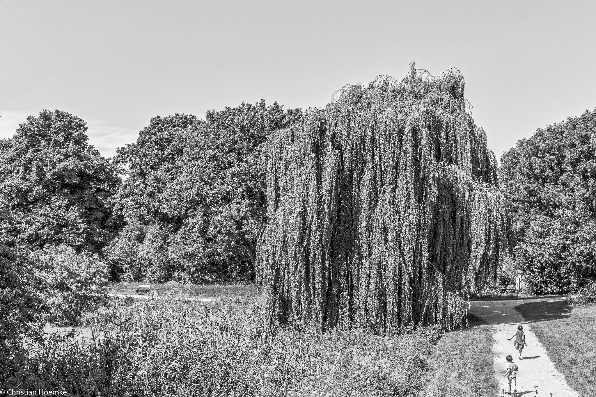 Weeping Willow by Christian Hoemke