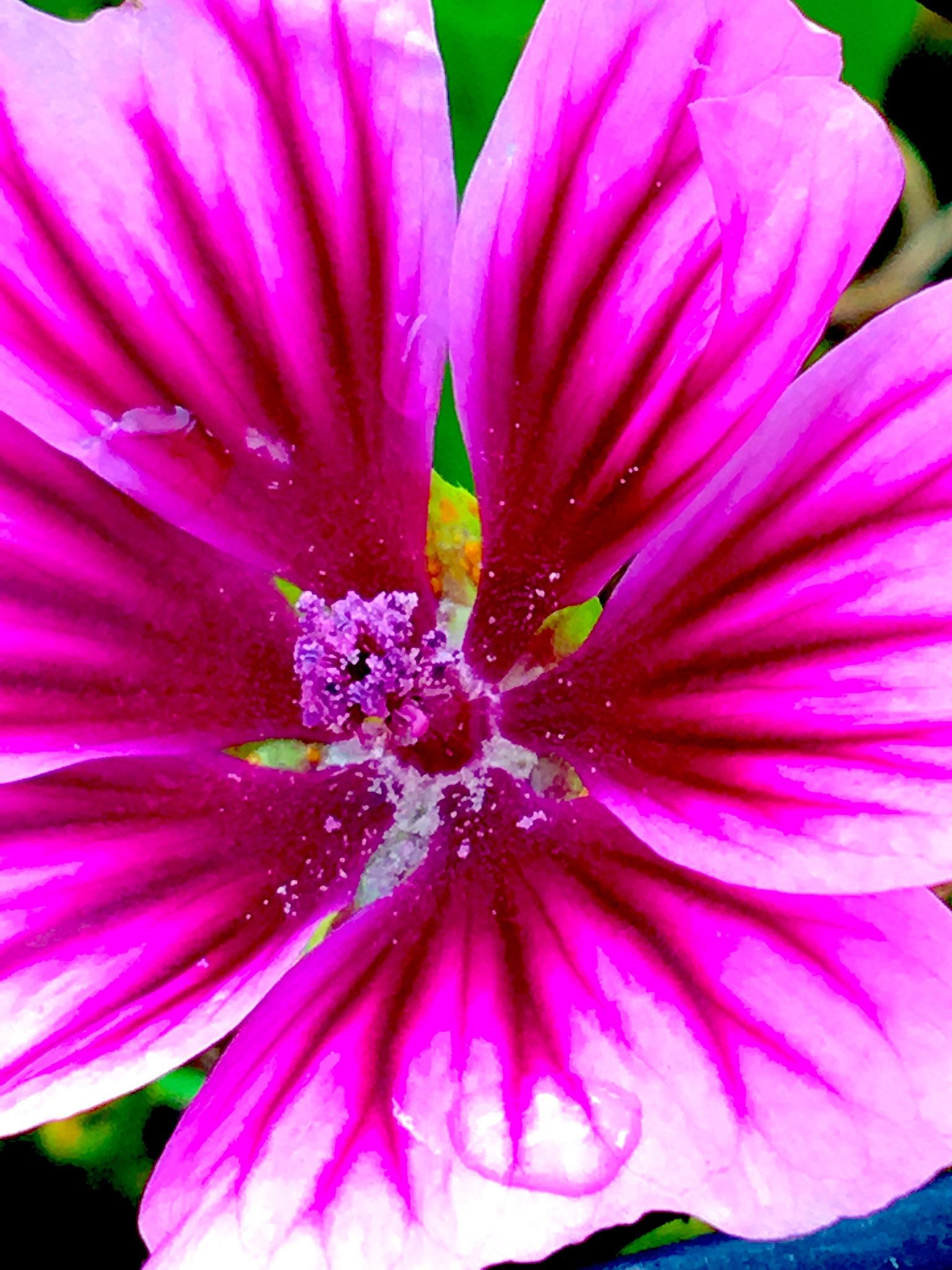 Blüte by Marianne Fischer