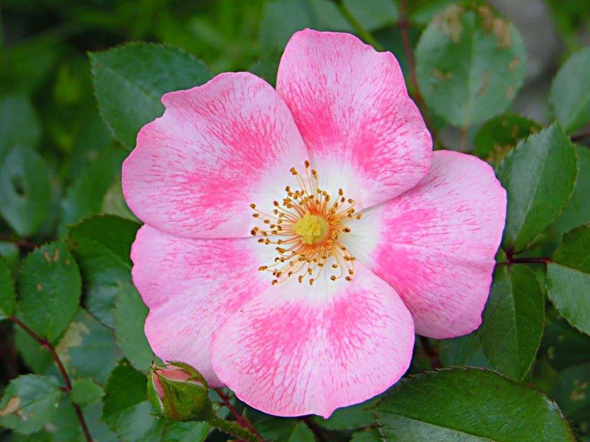 Bloom by Dana Garrison