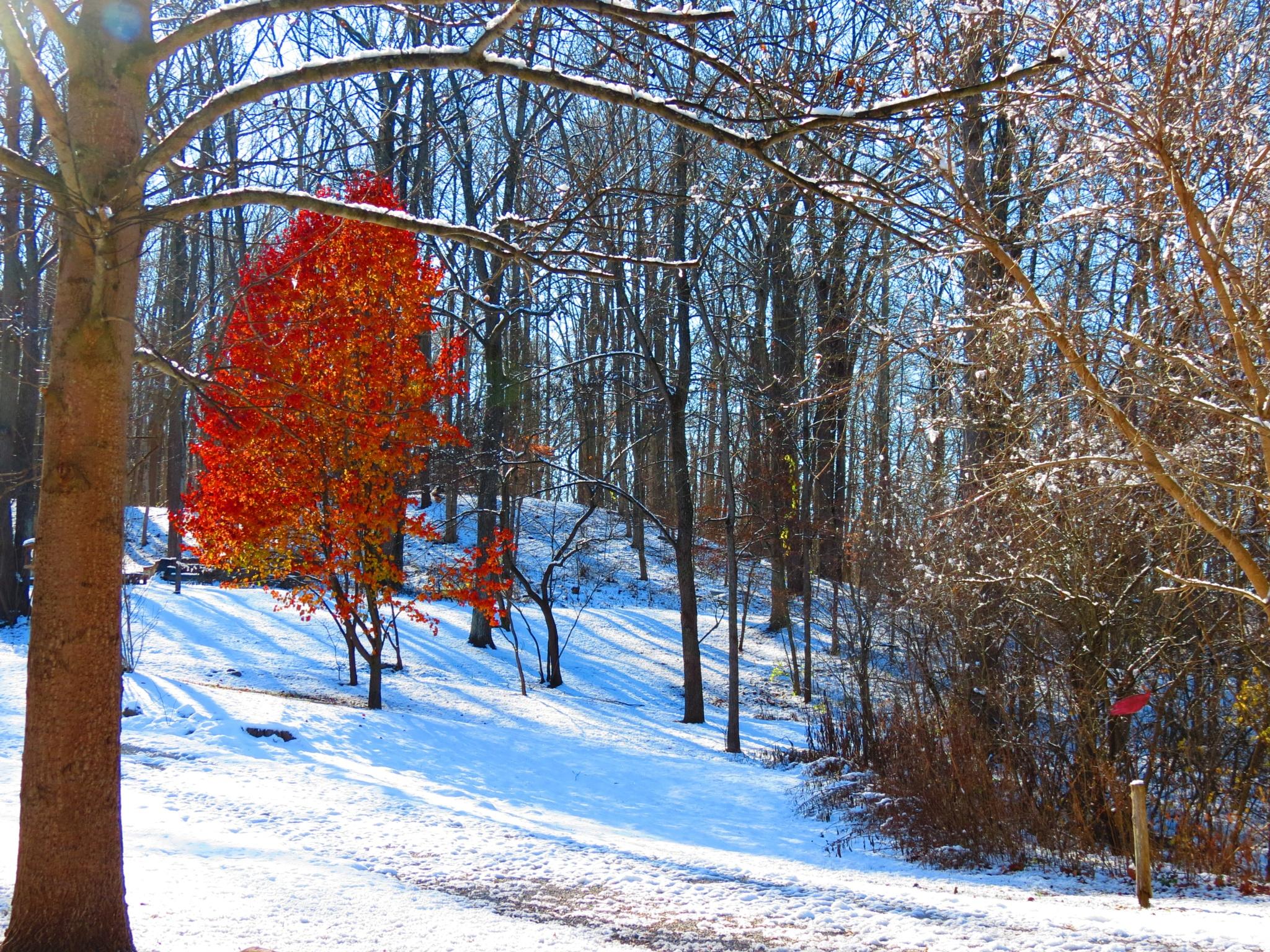 Autumn's last blaze by Dennis Ritter