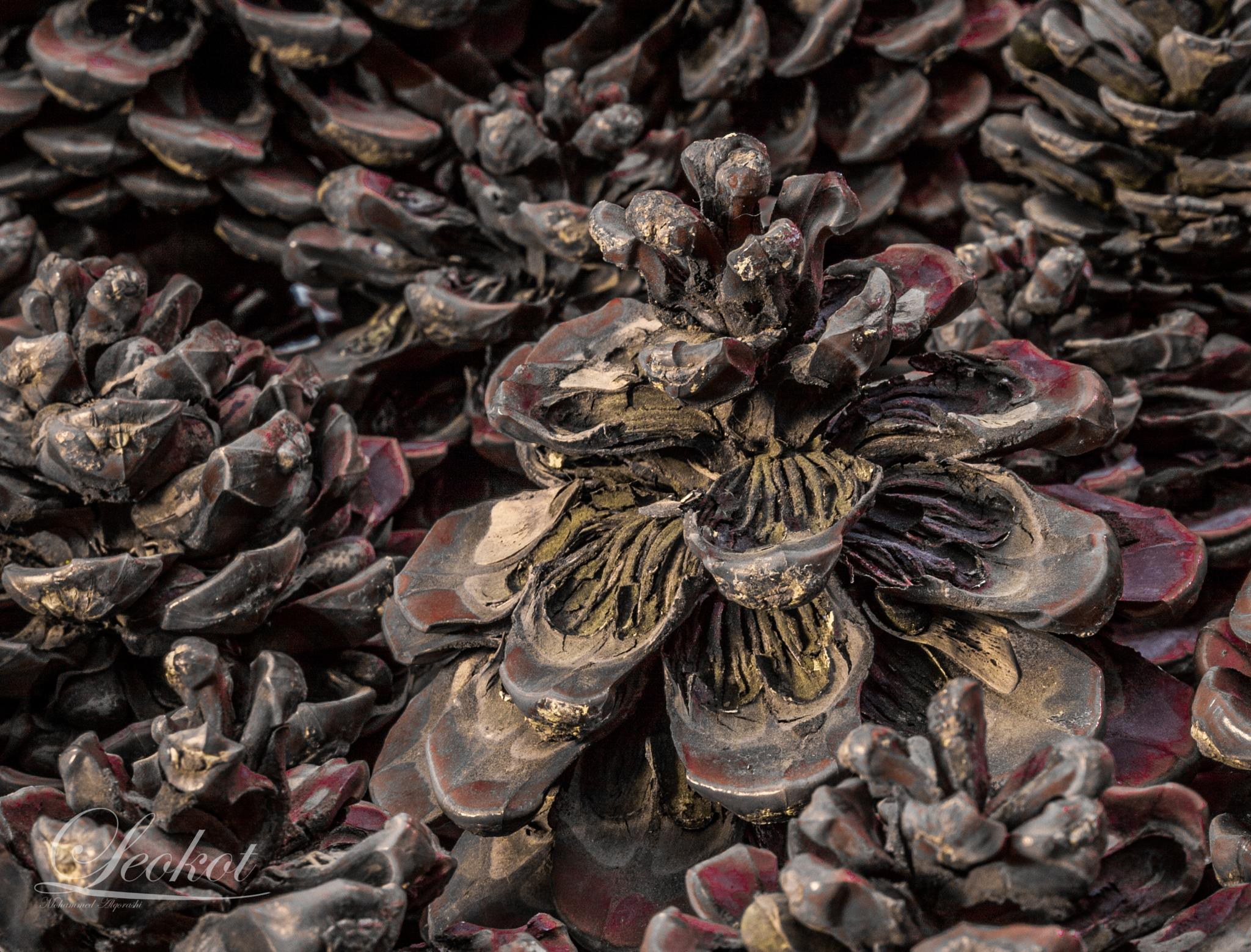 Beautifully Dry  by Mohammed Alqorashi