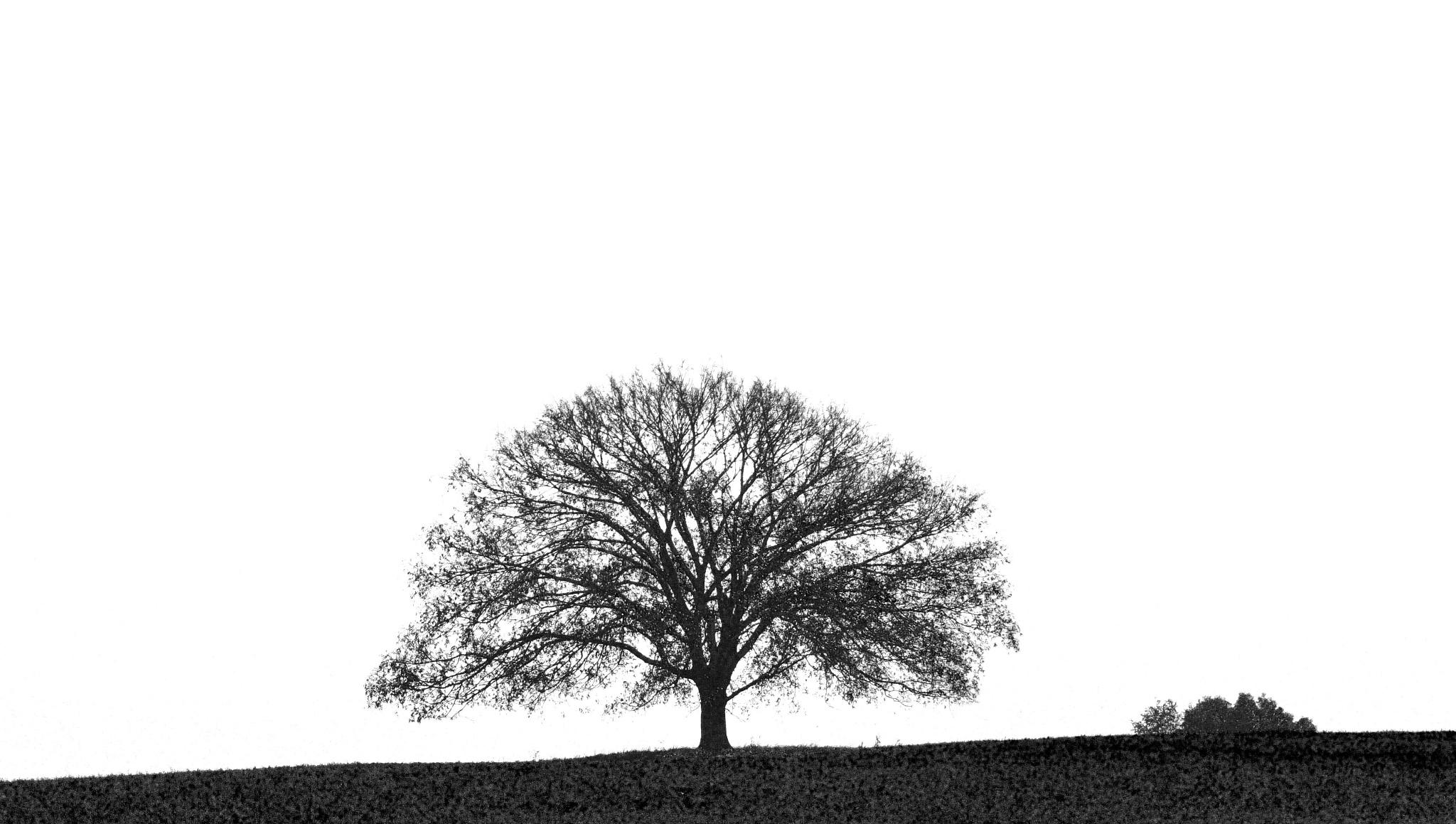 B/W tree by Robert Hayes
