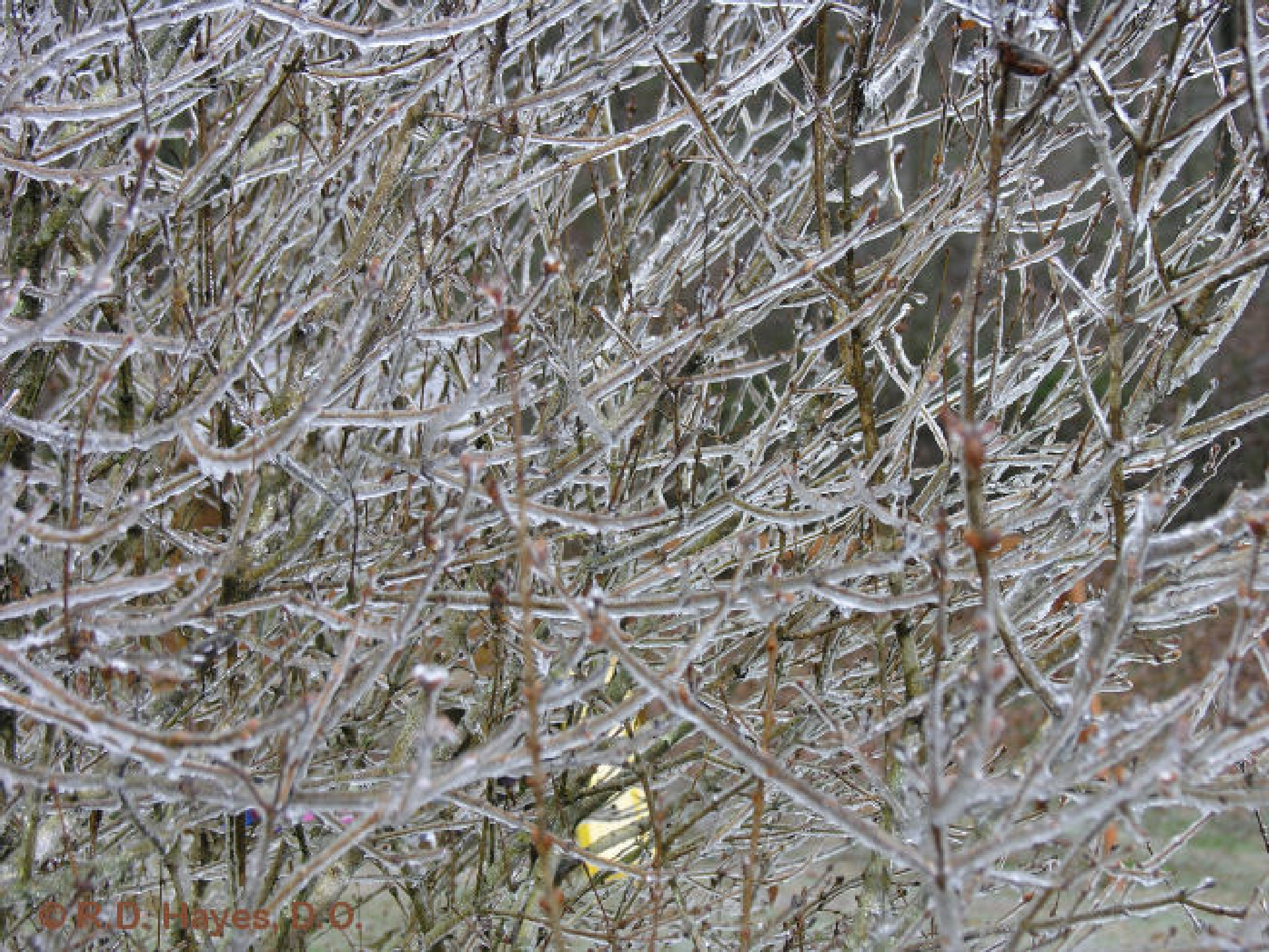 Ice storm evidence by Robert Hayes