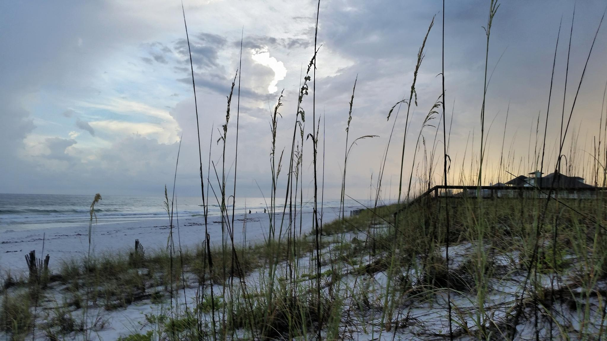 Beauty of the beach  by misty hill