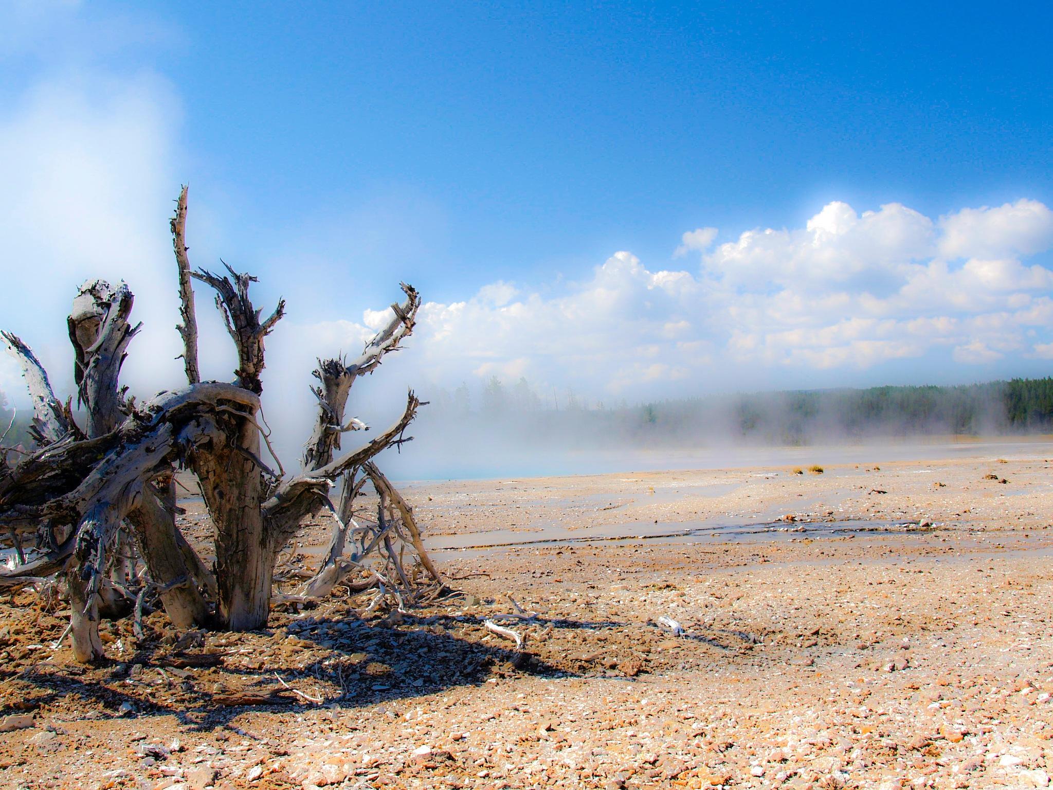 Yellowstone by Brigitte Werner