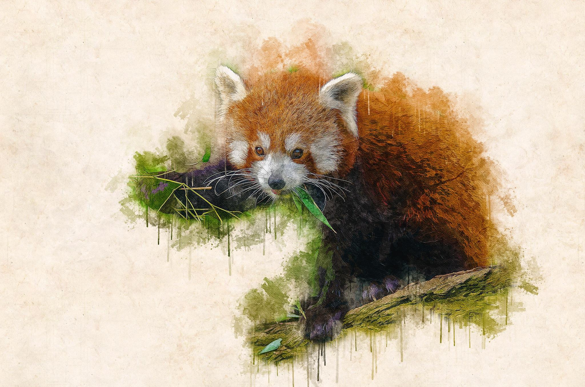 Red Panda by Brigitte Werner