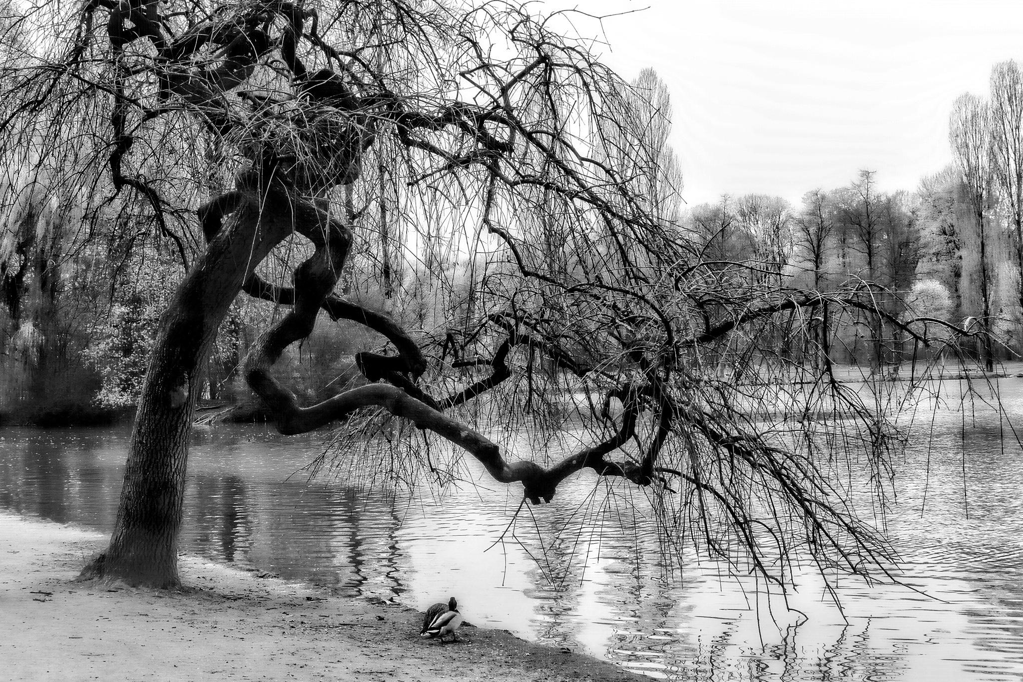 Crippled tree by Brigitte Werner