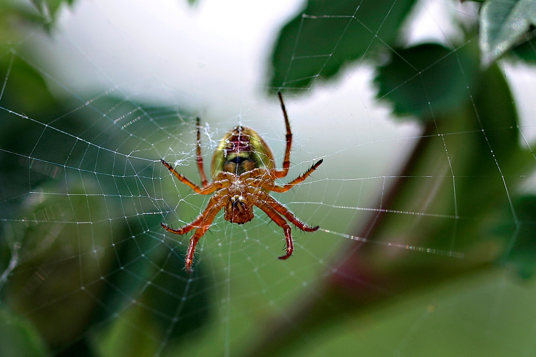 Spider by Brigitte Werner