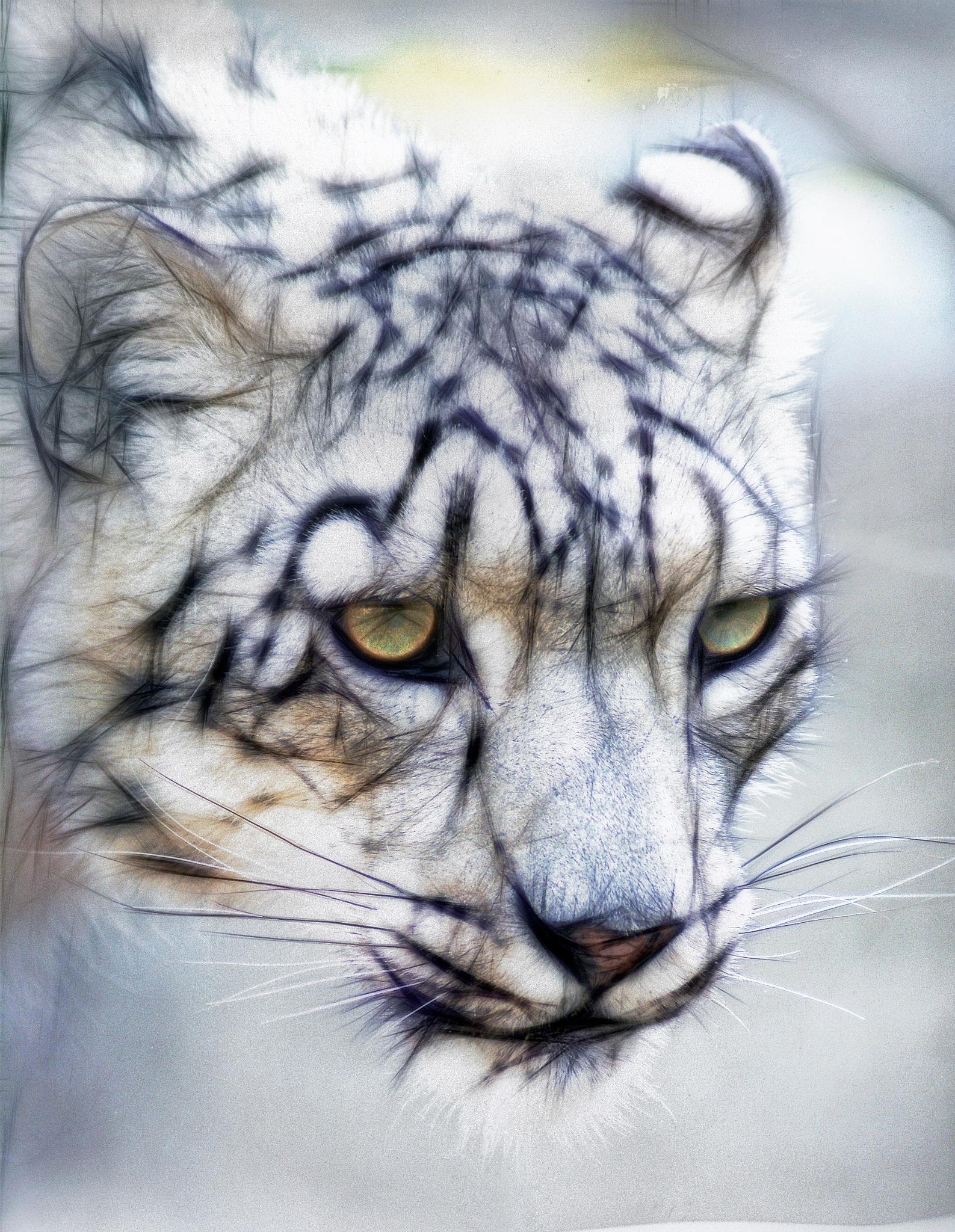Snow Leopard by Brigitte Werner