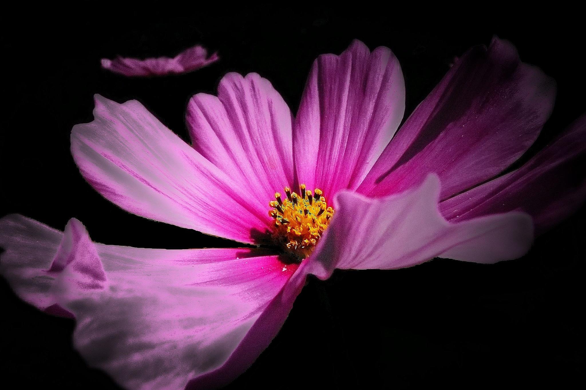 Beauty in Pink by Brigitte Werner