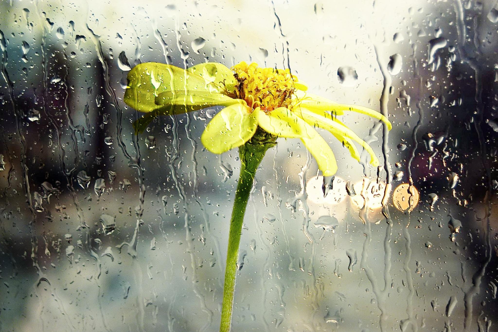 Blossom behind wet Glass by Brigitte Werner