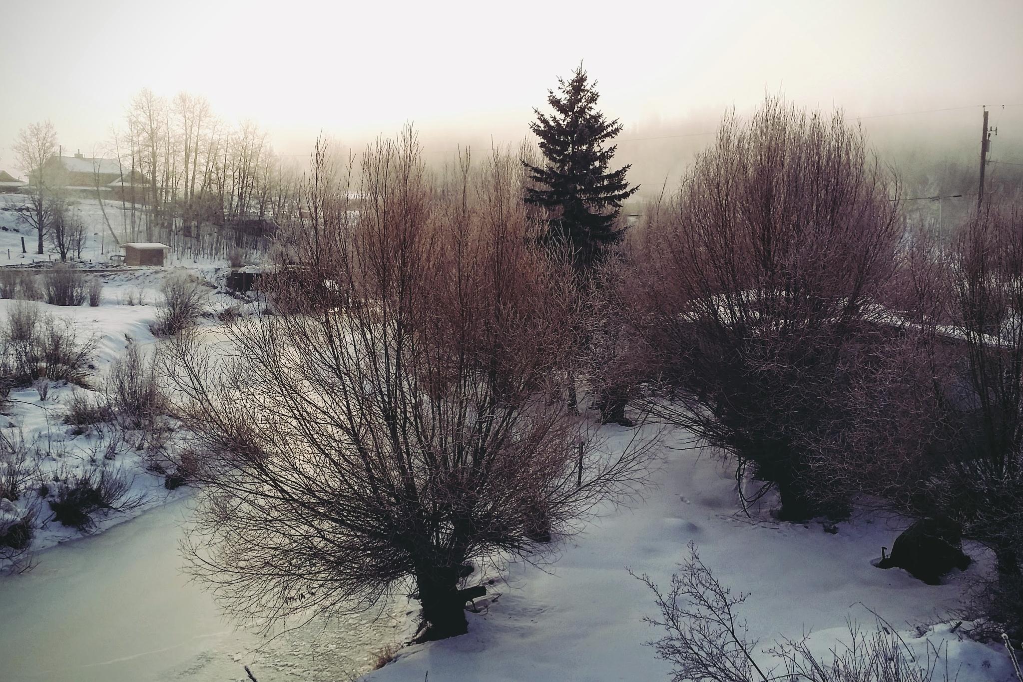 Foggy Day by Brigitte Werner