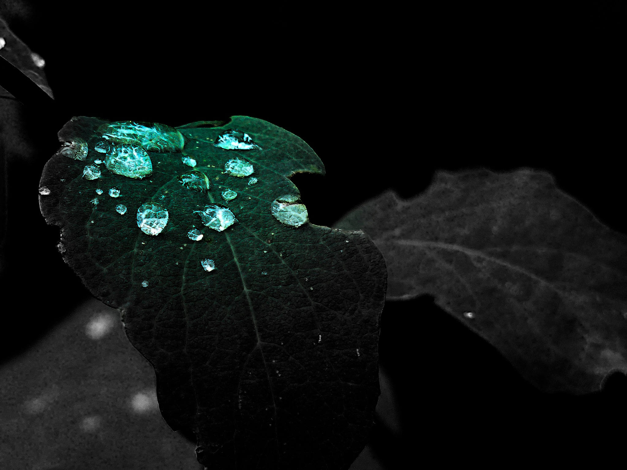 The Green Drops by Brigitte Werner