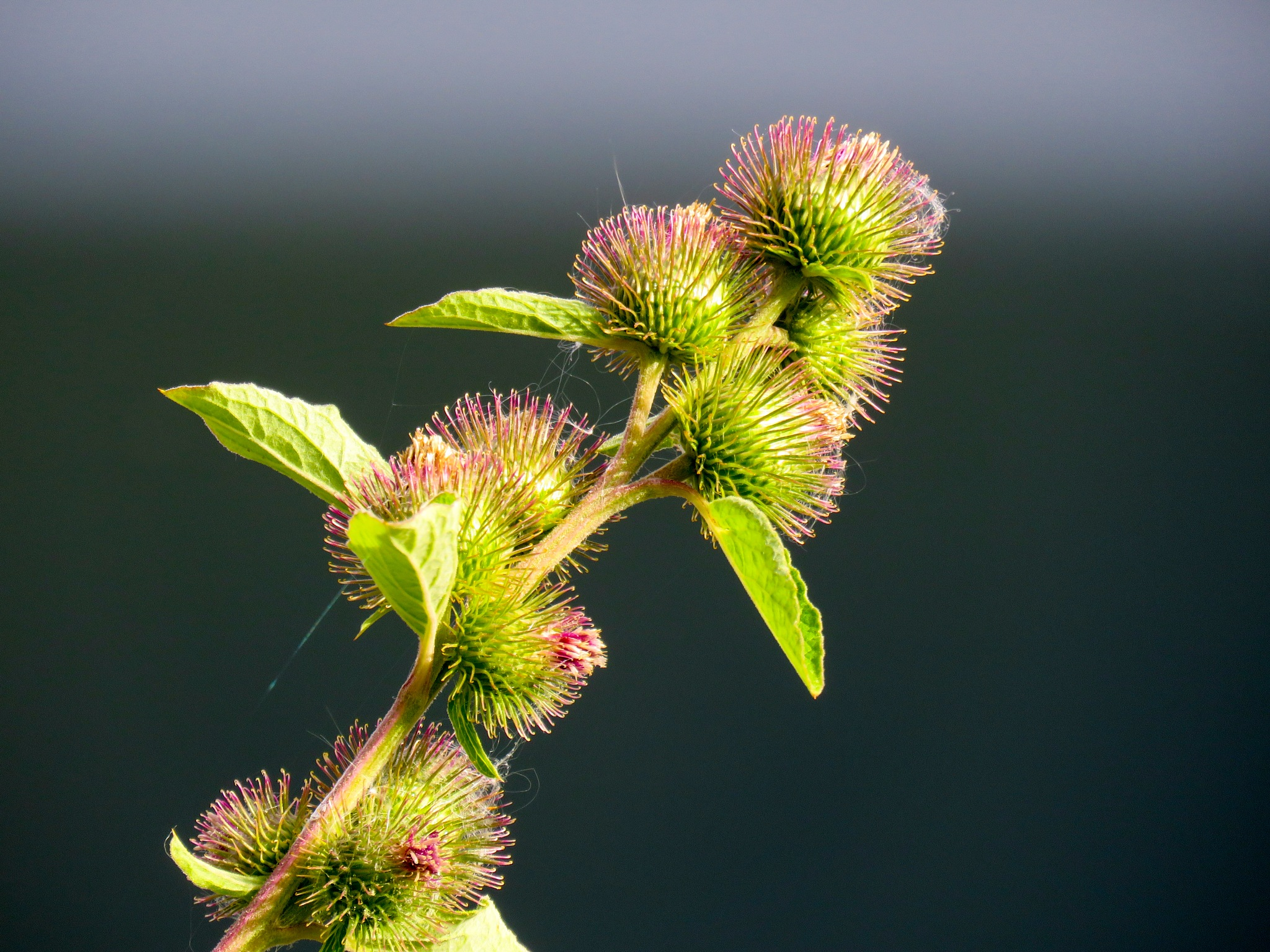 A fractious plant by Brigitte Werner