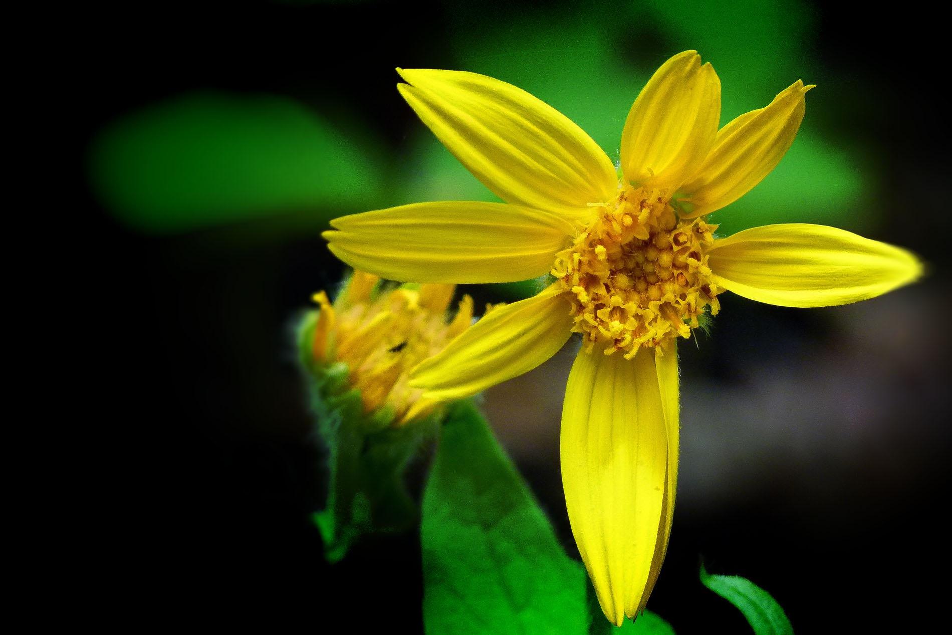 Yellow by Brigitte Werner