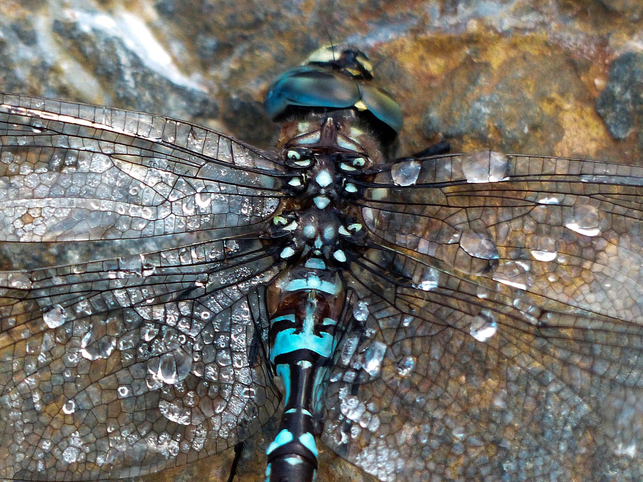 Wet Dragon Fly by Brigitte Werner
