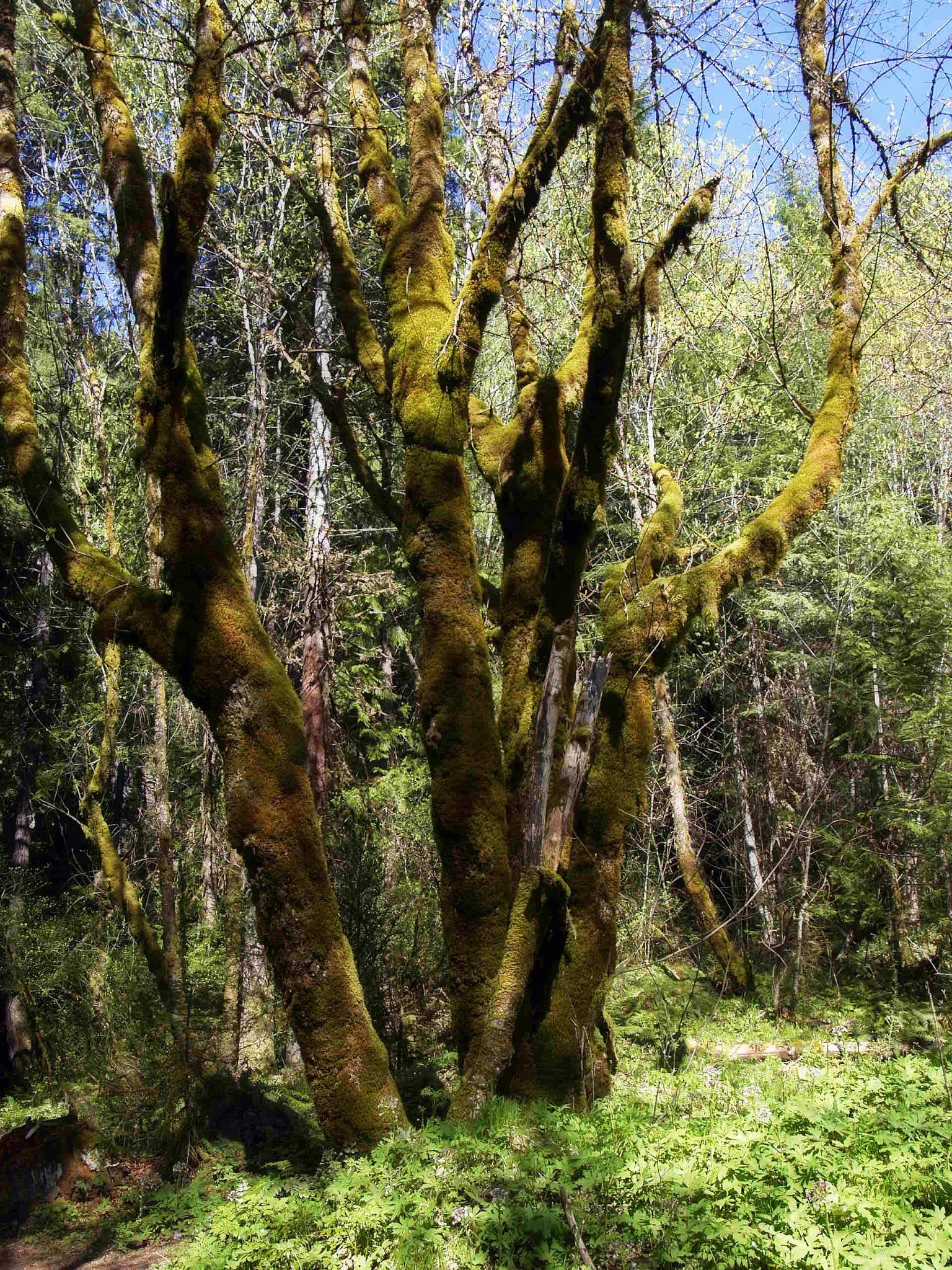 Deep in the Wood by Brigitte Werner